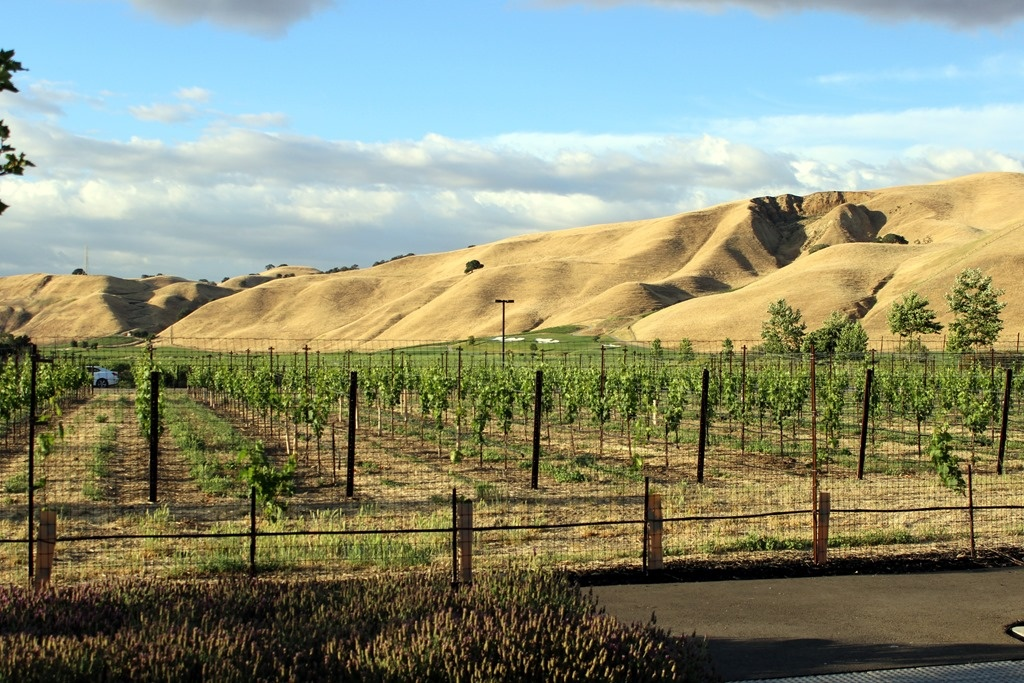 Wente Vineyards, Livermore California
