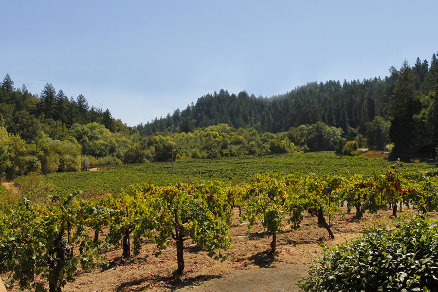 26-Vineyards to SE.jpg