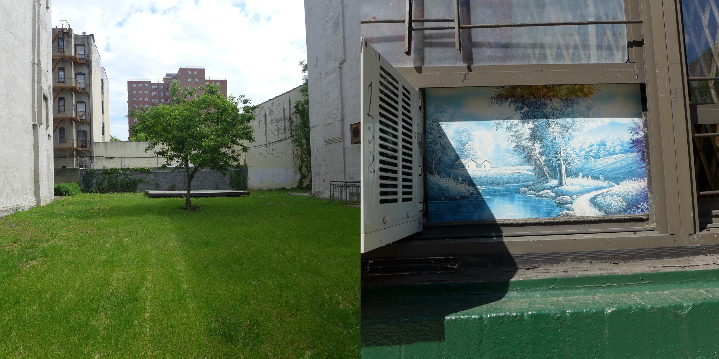 Tree, East 109th Street & Tree, East 108th Street