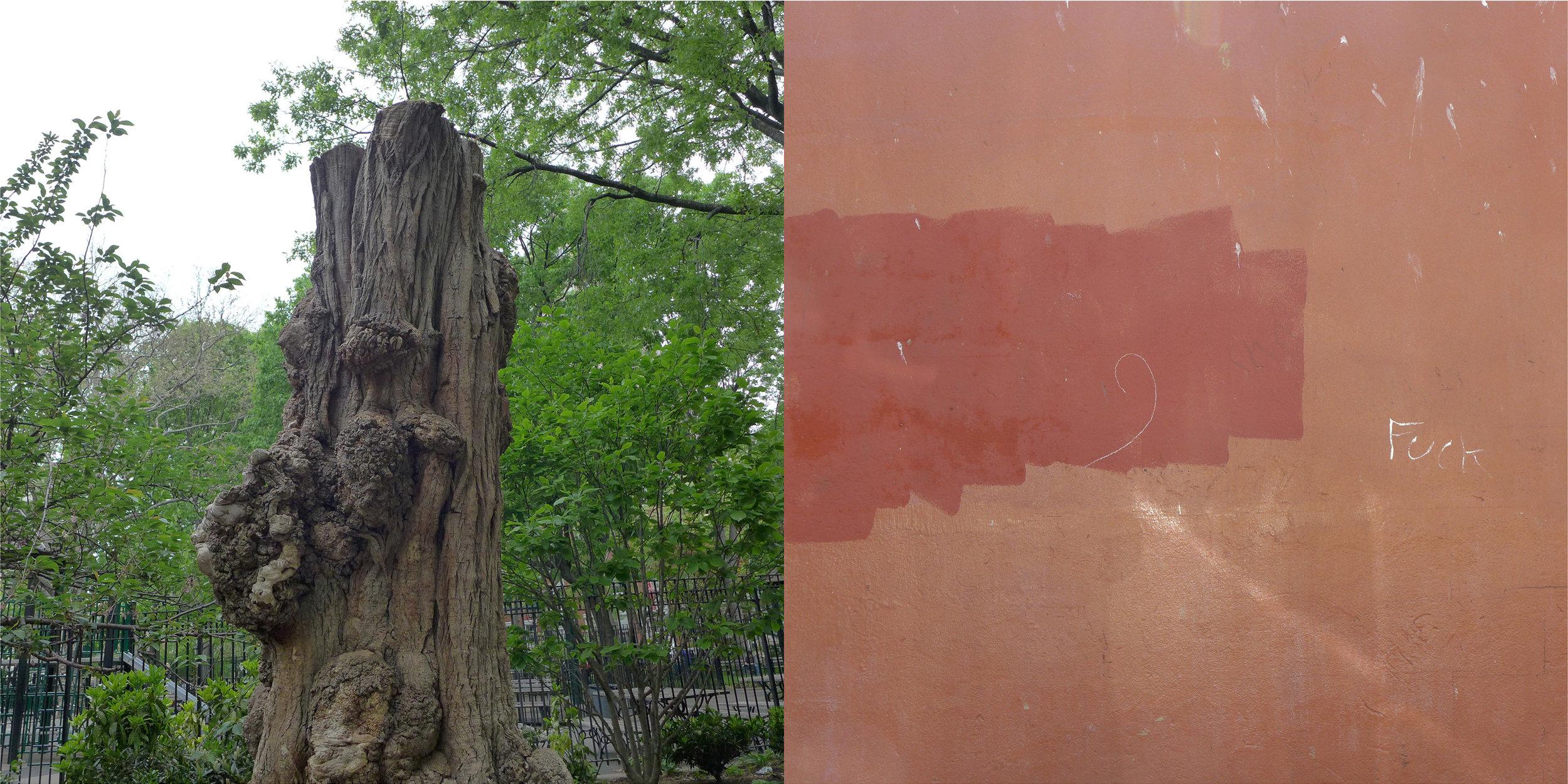 Tree, Washington Square Park & Graffiti