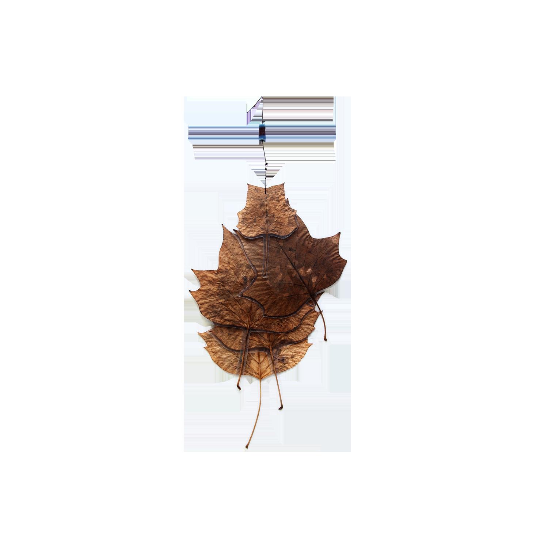 A New Leaf [2013]