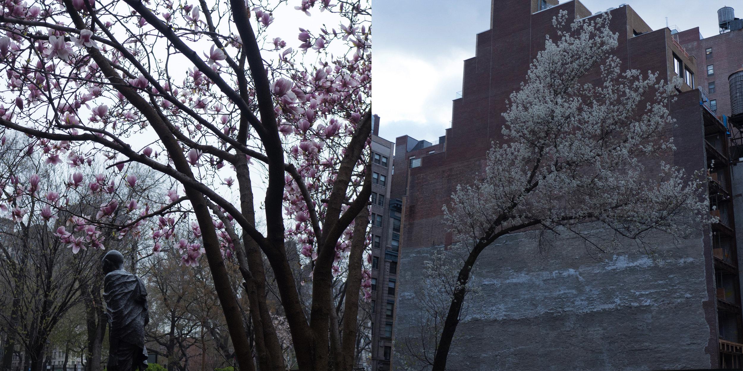 Gandhi, Union Square & Cherry Tree, University Place
