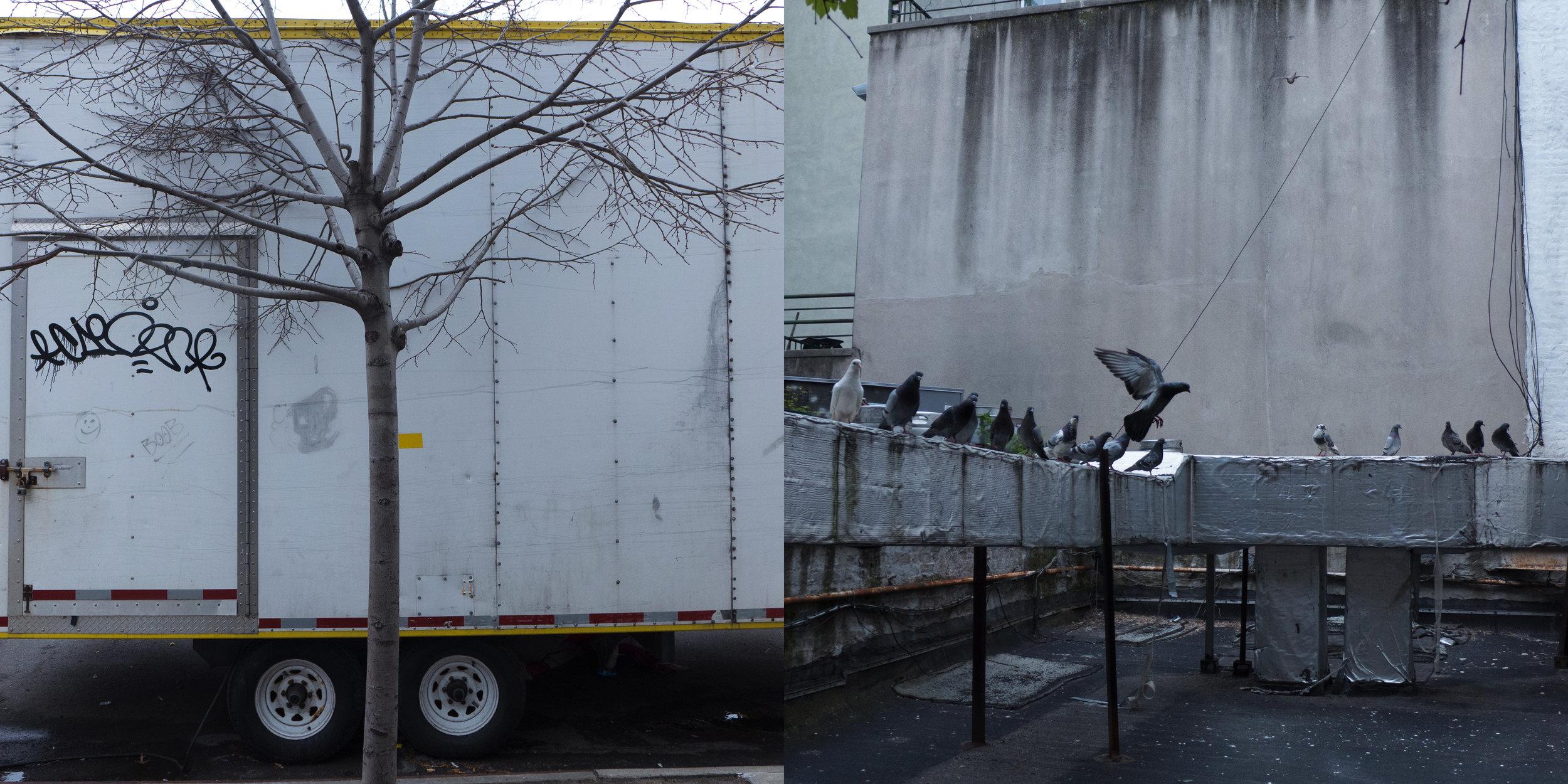 Tree & Truck, East Harlem & Birds, New York Central Art Supply
