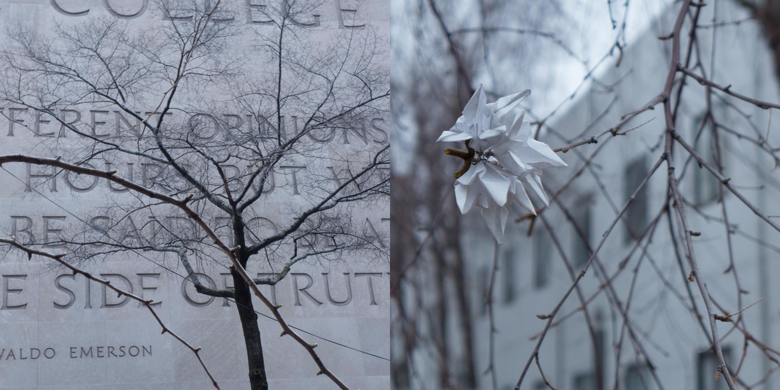 68th Street Tree/Paper Flower