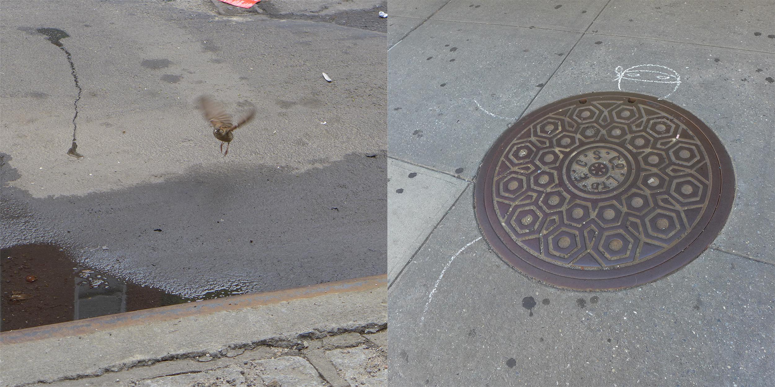 Bird Hovering/Manhole Turtle
