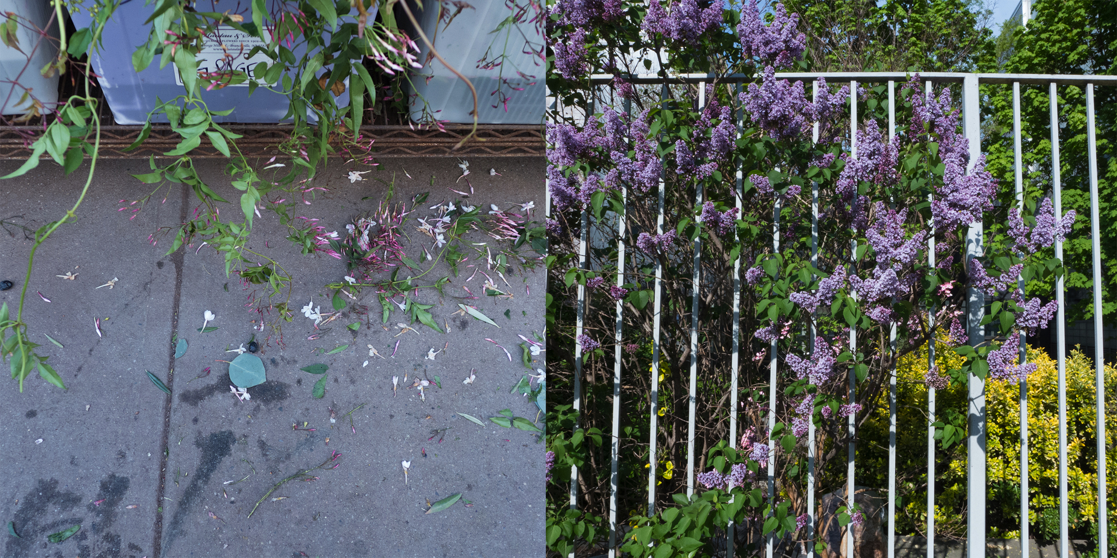 Flower District/Fence