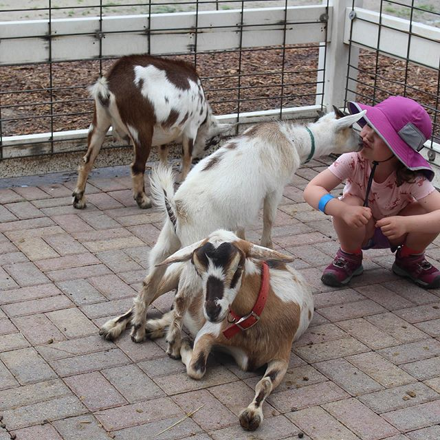 A day off from the beach to hang with some animal friends. 🐐 🐴 🐓 🦓 #audreygracebryan