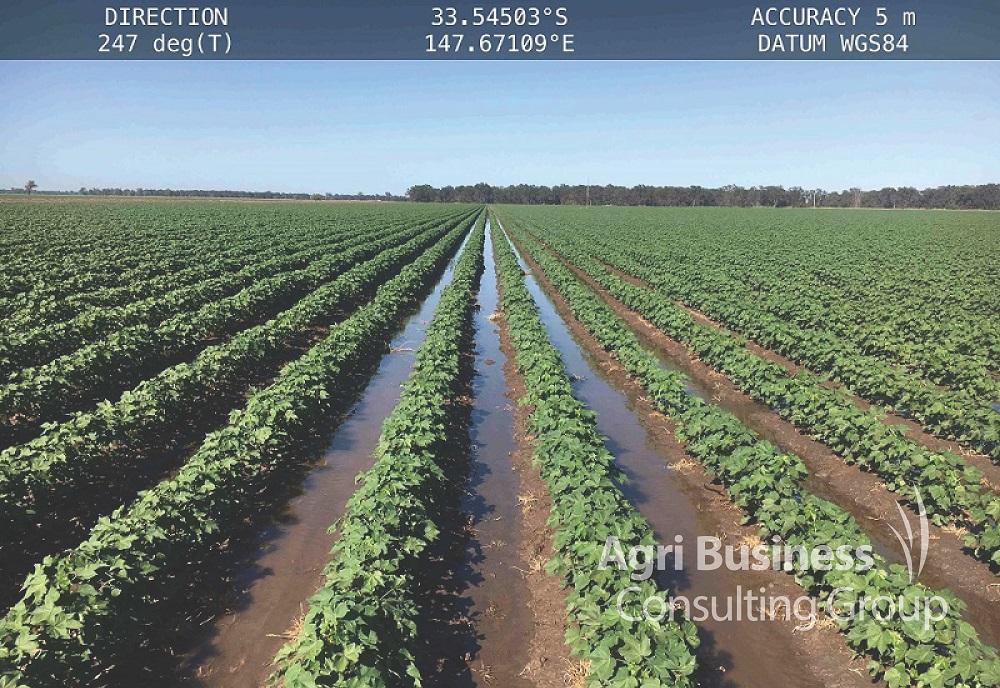 Cotton irrigation channels, Darling Downs Queensland