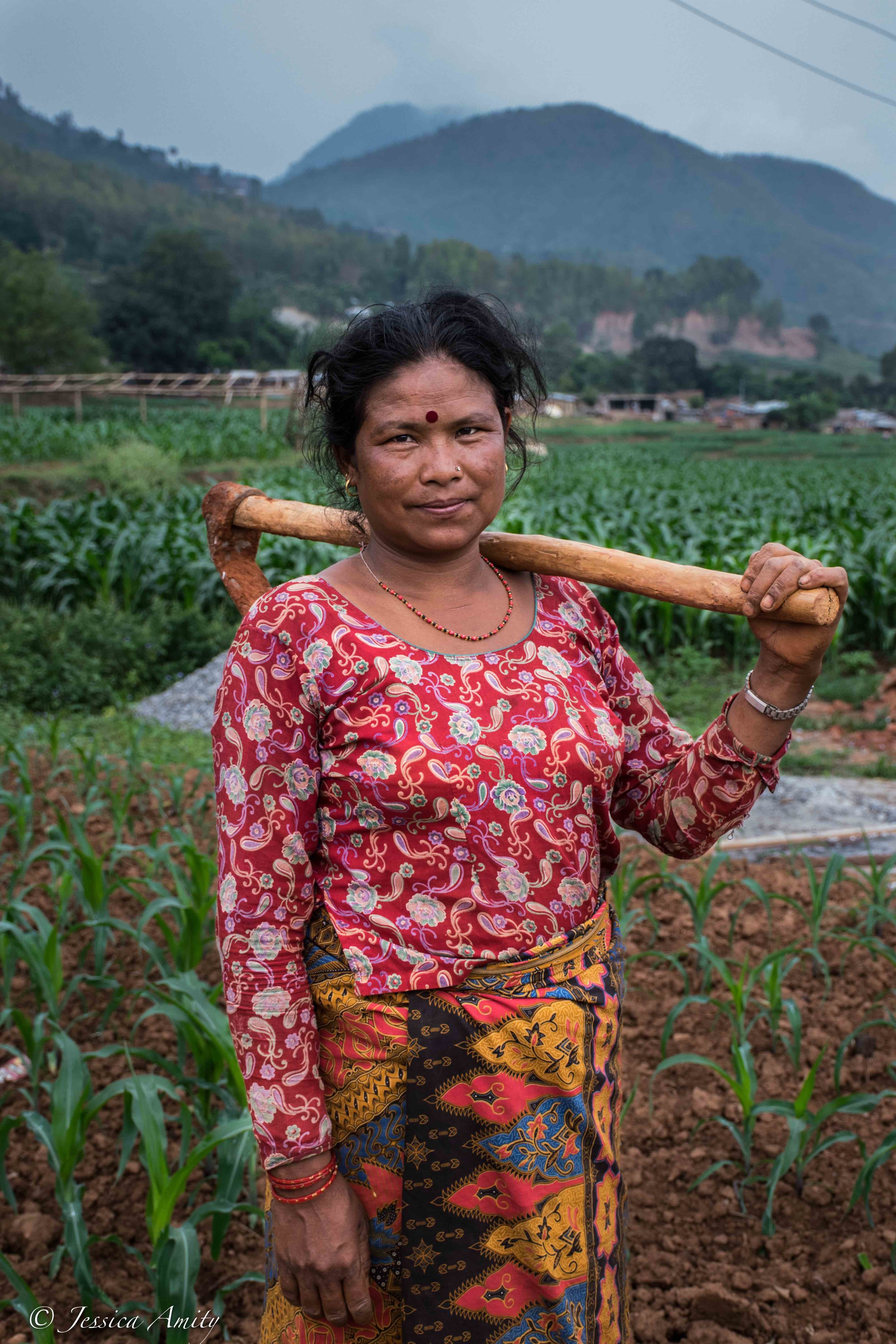 Nepal is an agricultural country. Majority of the people and communities in Nepal are dependent on agriculture to provide them with crops and around 80% of the people's occupations are based around agriculture. Rice, wheat, maize and buckwheat are the major staple food crops.