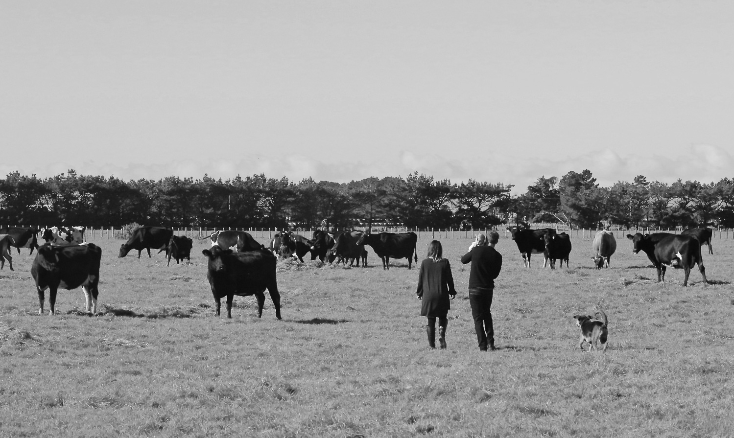 black-and-white-photo-of-family-looking-at-cows-in-paddock.jpg