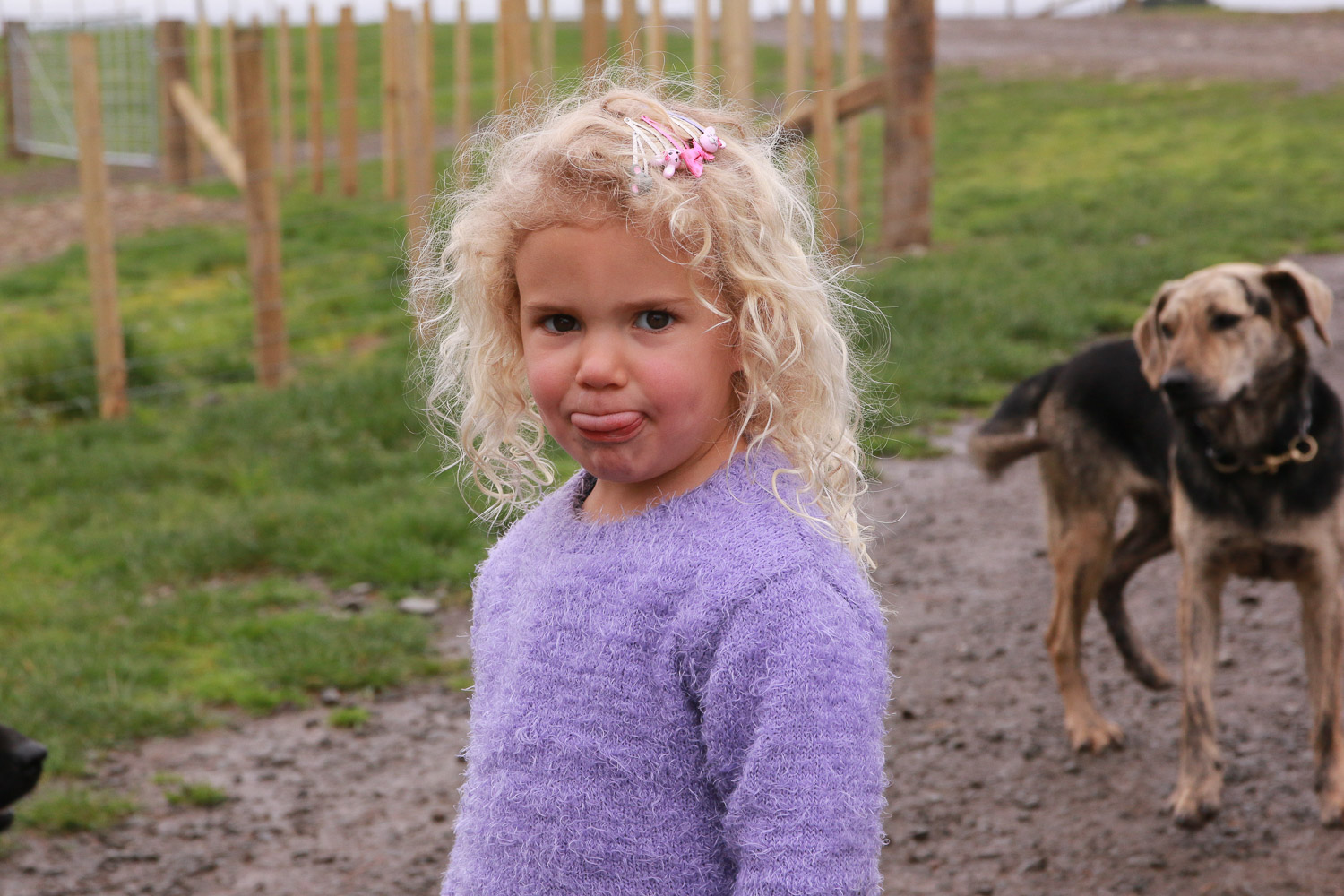 little-girl-wild-blonde-hair-in-purple-top-dog-in-background-on-farm-clips-in-her-hair