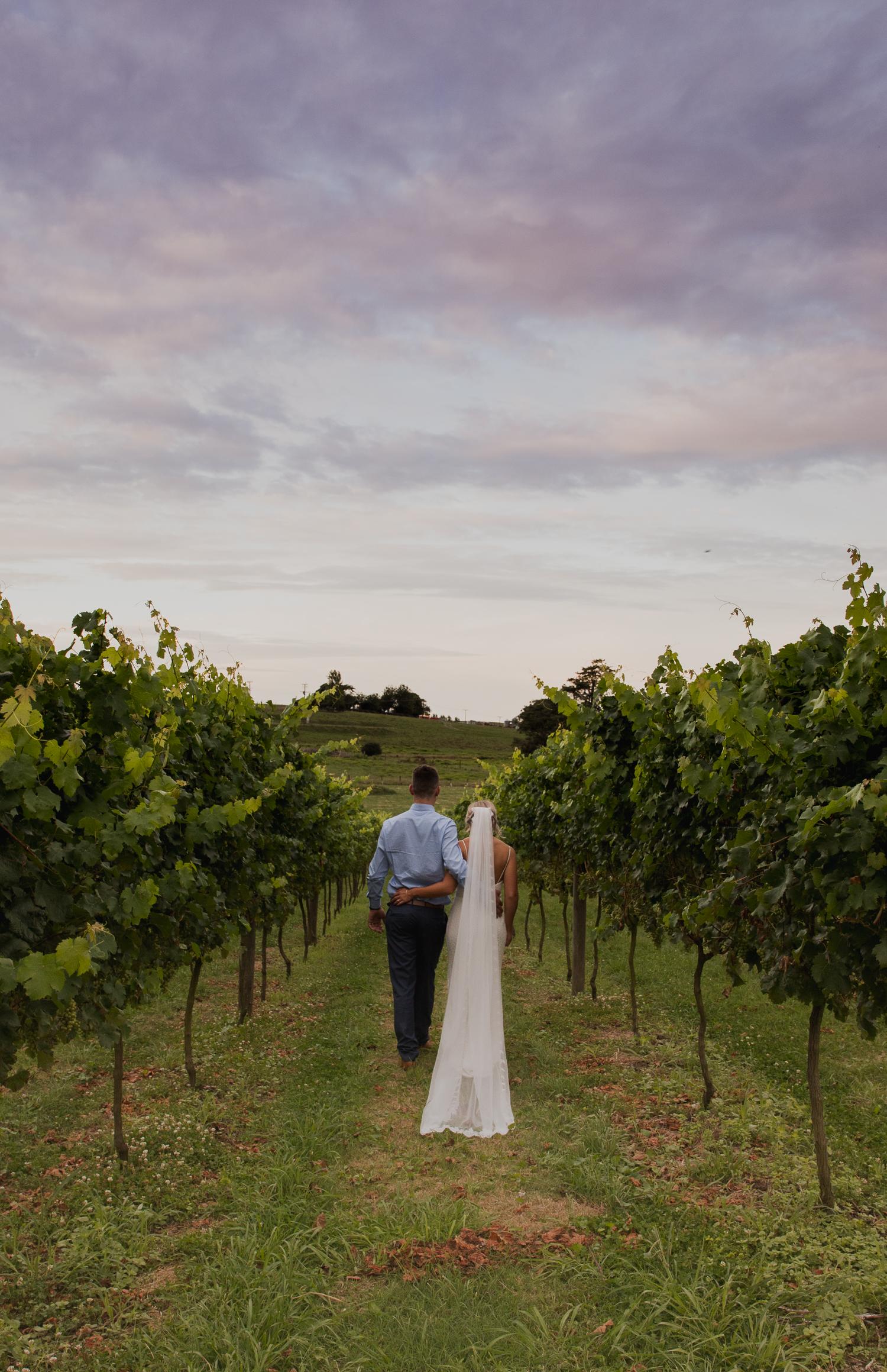 bride and groom in vines at Vilagrad Winery