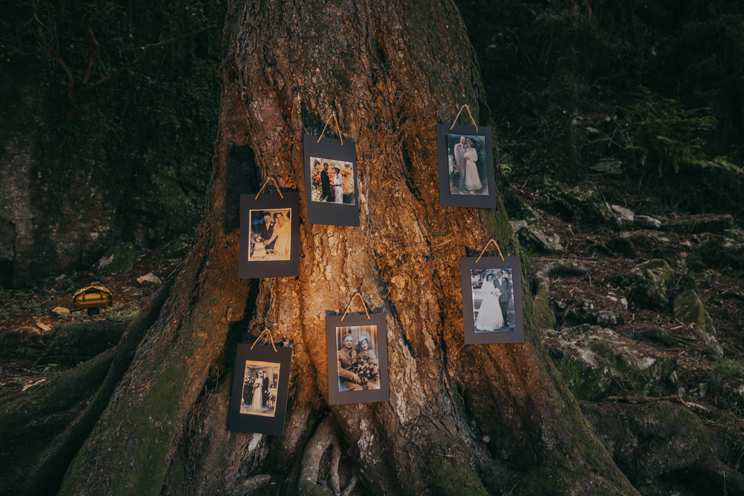 waikato-new-zealand-wedding-photographer-summer-rural-wedding-reception-details-family-wedding-photos-on-tree.jpg