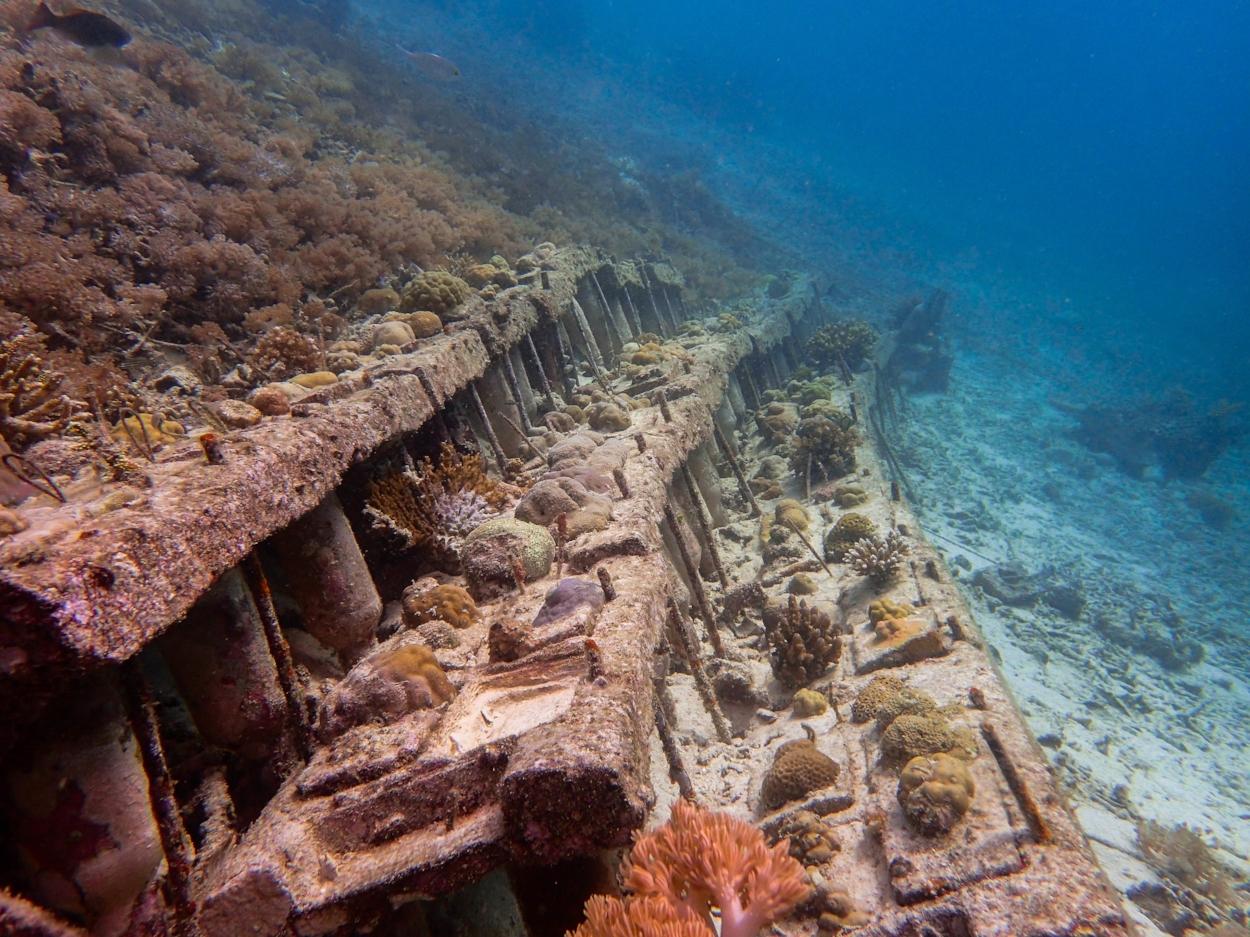 steps coral3 (1 of 1)-3.jpg
