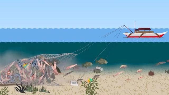 bottom-trawling-carousel_E6605408E02D4380AE46FABF07E00E99.jpg