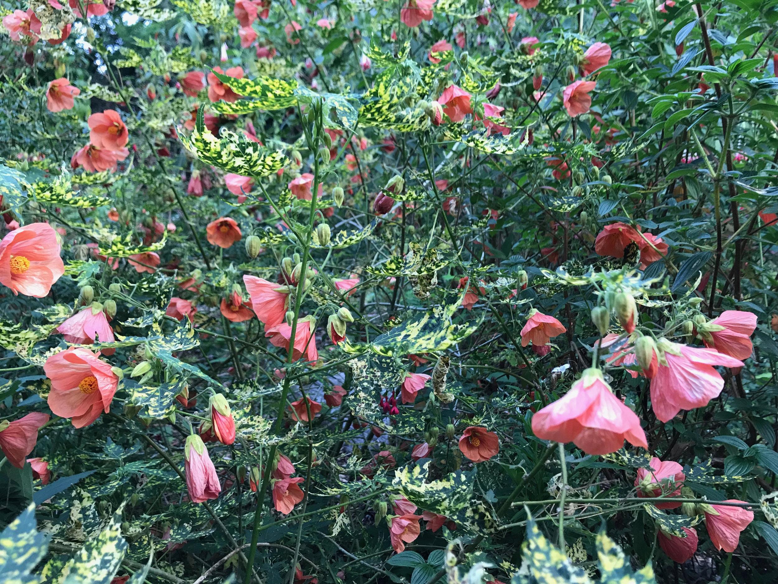 Flowers_Golden_Gate_Park_Diana_Berlin.jpg