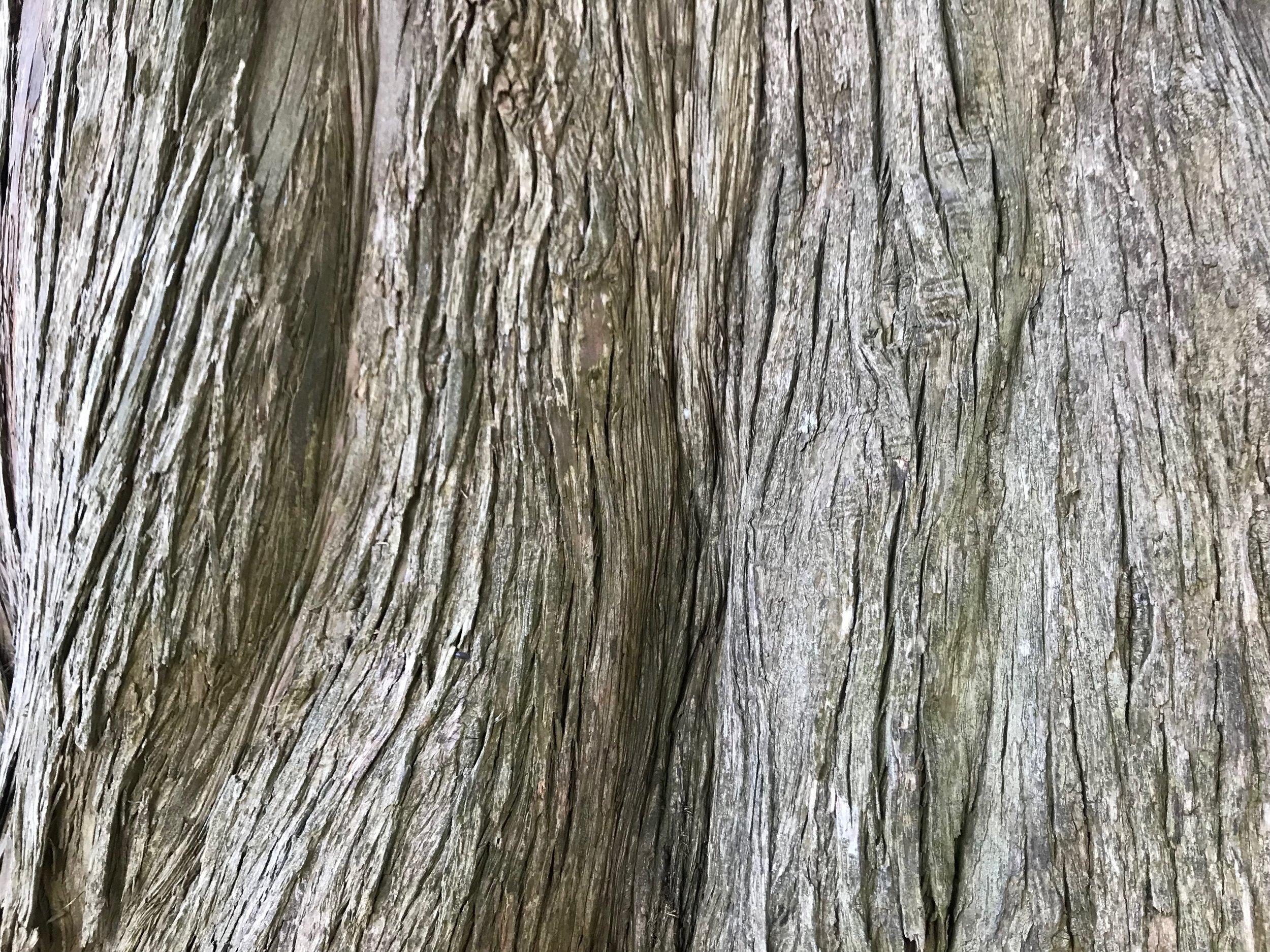 A tree trunk that caught my eye on my last walk through Golden Gate Park.