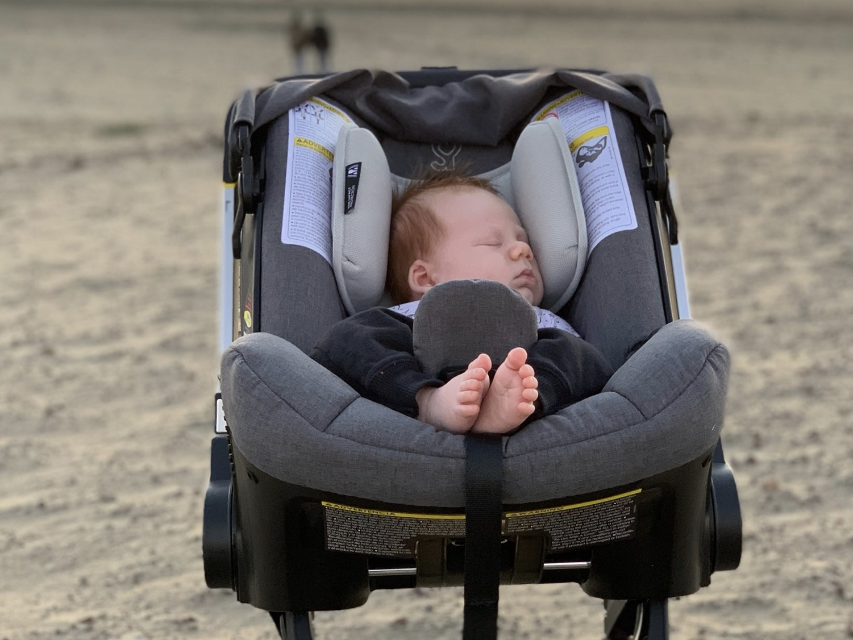Cooper in his  Doona  at the Ocean Beach. Photo by  Erik .
