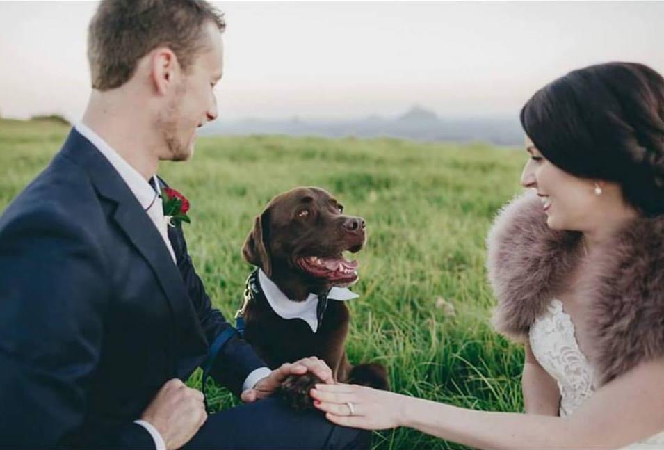 First Class Pet Wedding Assistants -