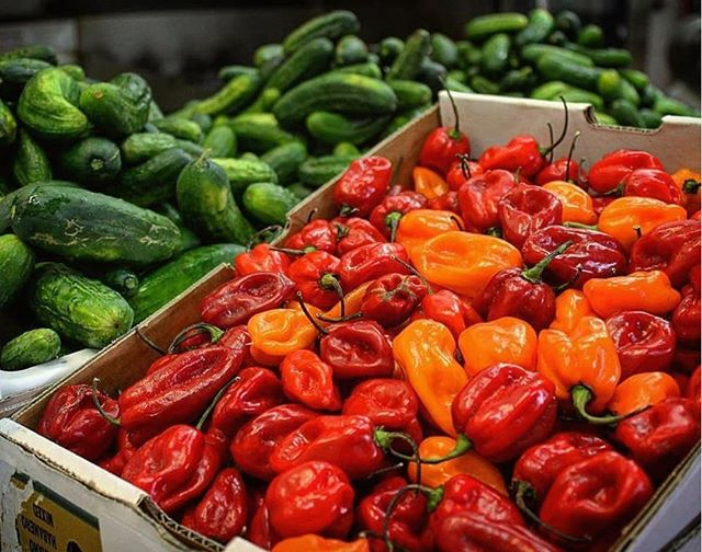 As Habaneros ripen from green to red, they gain heat. Red Habaneros are known to be up to 40 times hotter than a jalapeño!❗️🔥🌶 ⠀⠀⠀⠀⠀⠀⠀⠀⠀ ⠀⠀⠀⠀⠀⠀⠀⠀⠀ #changzhotsauce #redhabanero #habanero #hotsauce #hot #sauce #hotaf #spicy #chilli #chili #tropical #flavour #peppers #habaneropeppers #pepper #vegan #glutenfree #keto #ketodiet #vegetarian #veganrecipes #veganfood #veganfoodlovers #healthy #mealprep healthyfood #americanbbq #southernbbq #lowandslow #lownslow #lowcarb