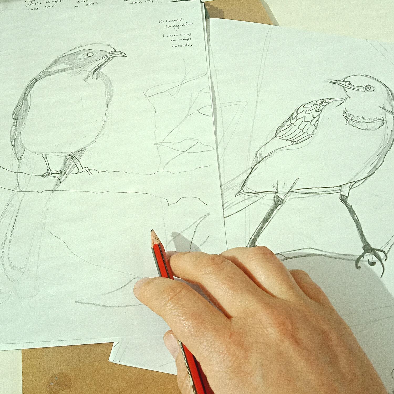 6 Sketches.jpg