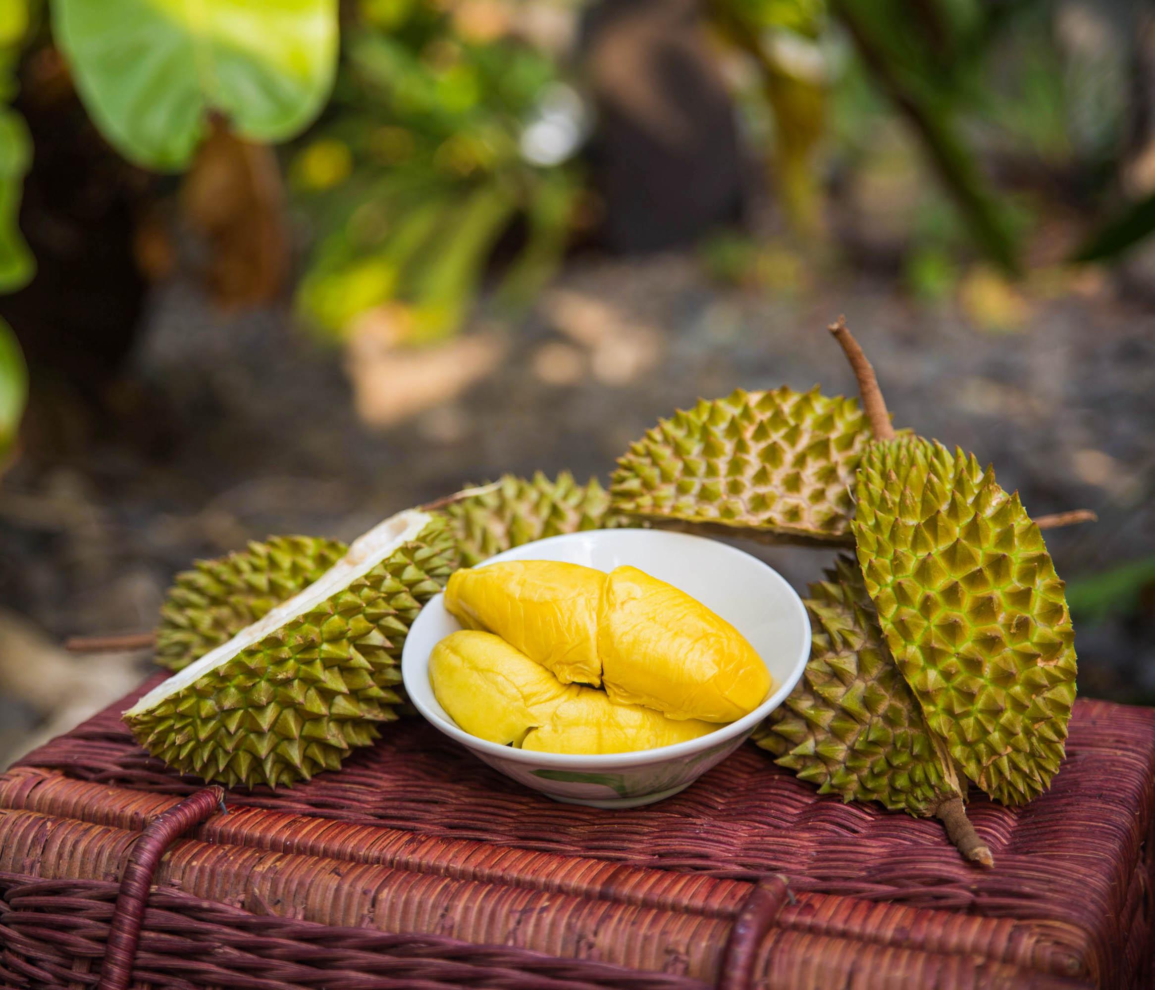 - 榴槤貴族的堅持榴槤貴族堅持「三日」原則,即榴槤從樹上落地後,三日內送到顧客手上。我們致力為大家提供最新鮮、最優質的榴槤,滿足愛好者的味蕾﹗Mr. Durian adopts the