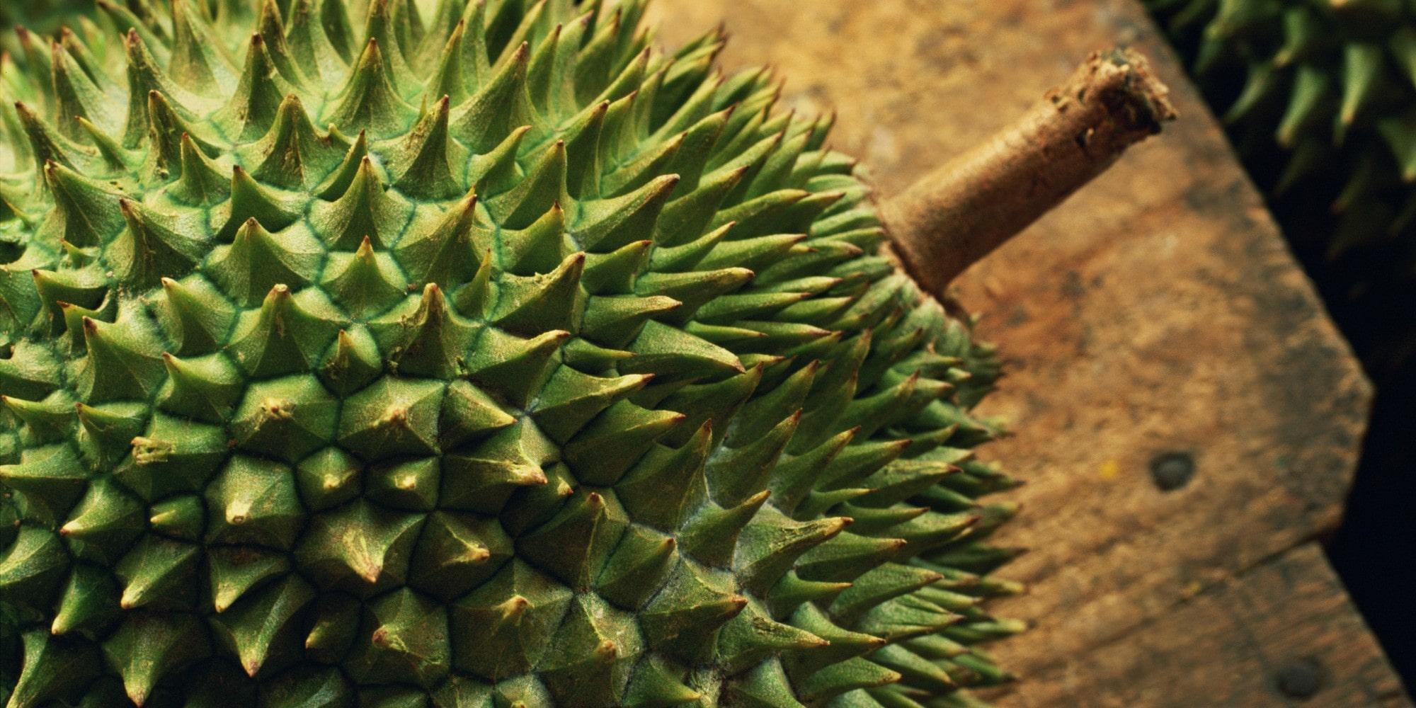 LOVE IS ENDURIAN - 'mr.durian'