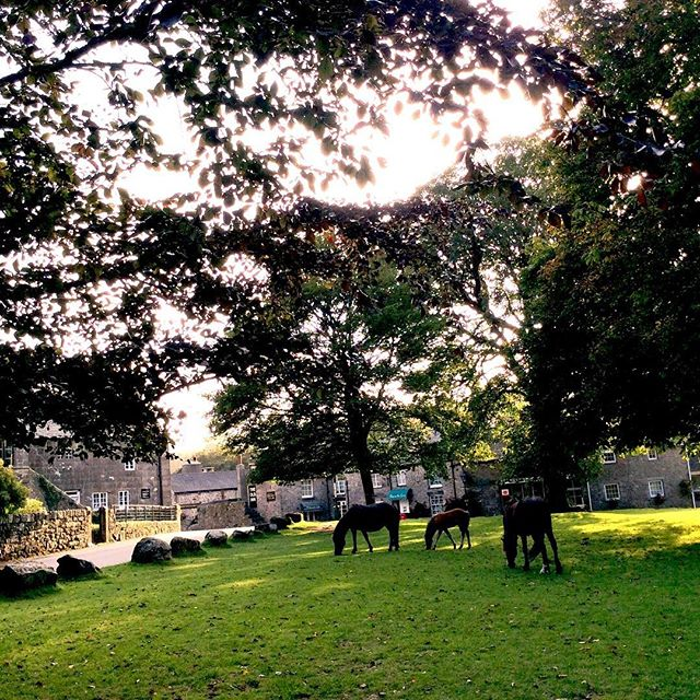 Last-minute topping of the Green before Fair Day... #widecombefair #dartmoor #autumn #ponies