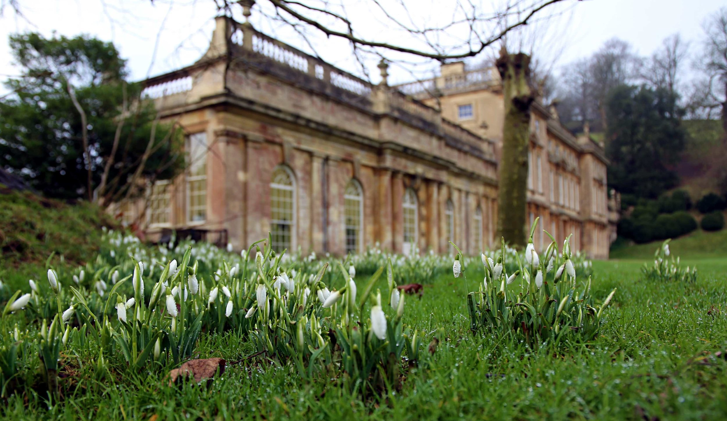 Snowdrops at Dyrham Park © National Trust / Laura Williams