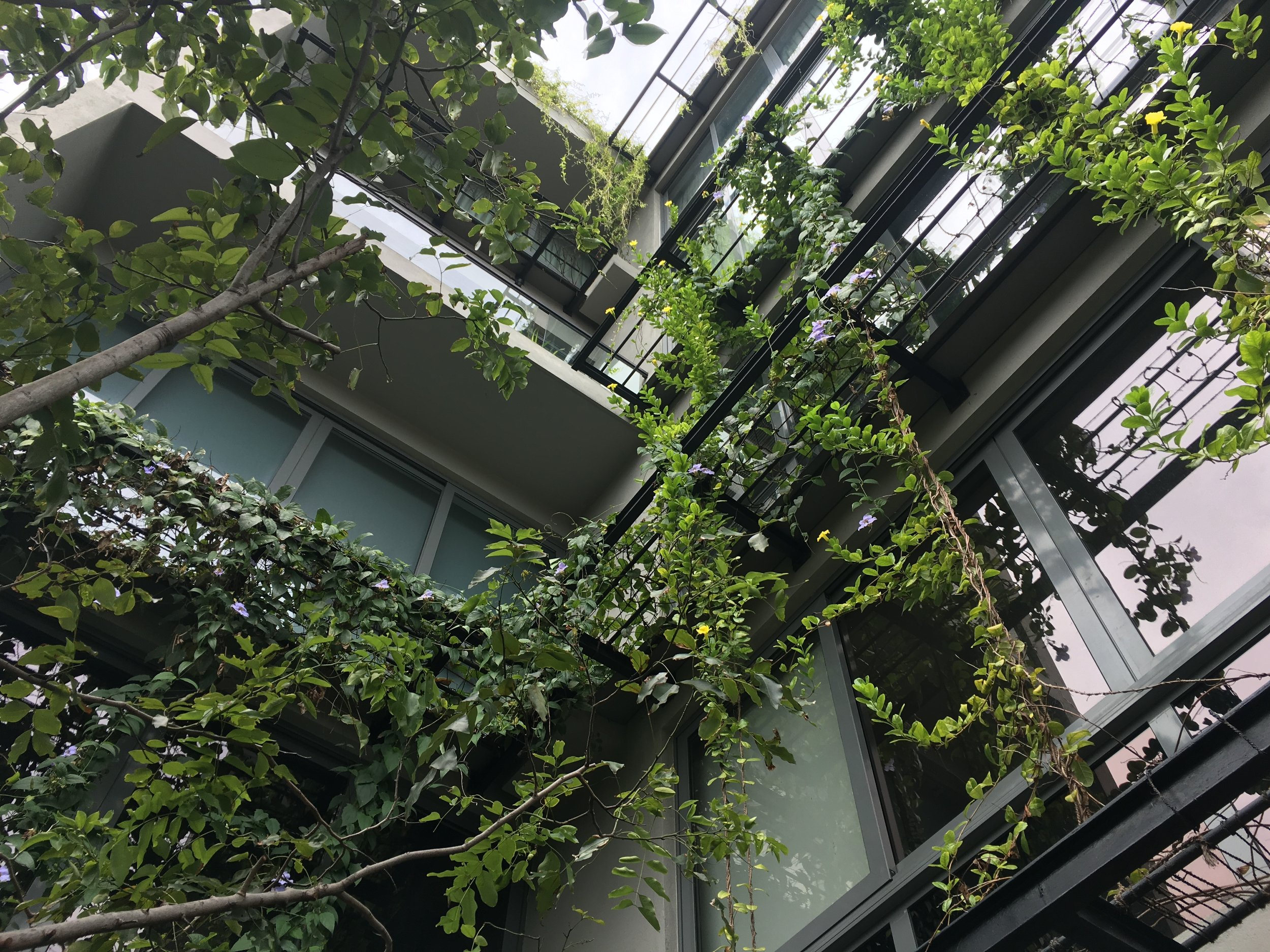 The Ebony Tree apartments, central Colombo - mid-rise urban architecture accommodating nature to draw the outside in