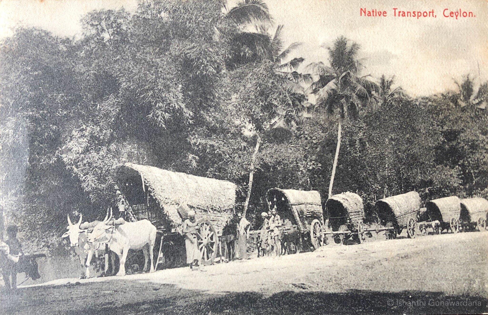 Bullock cart travel in Sri Lanka