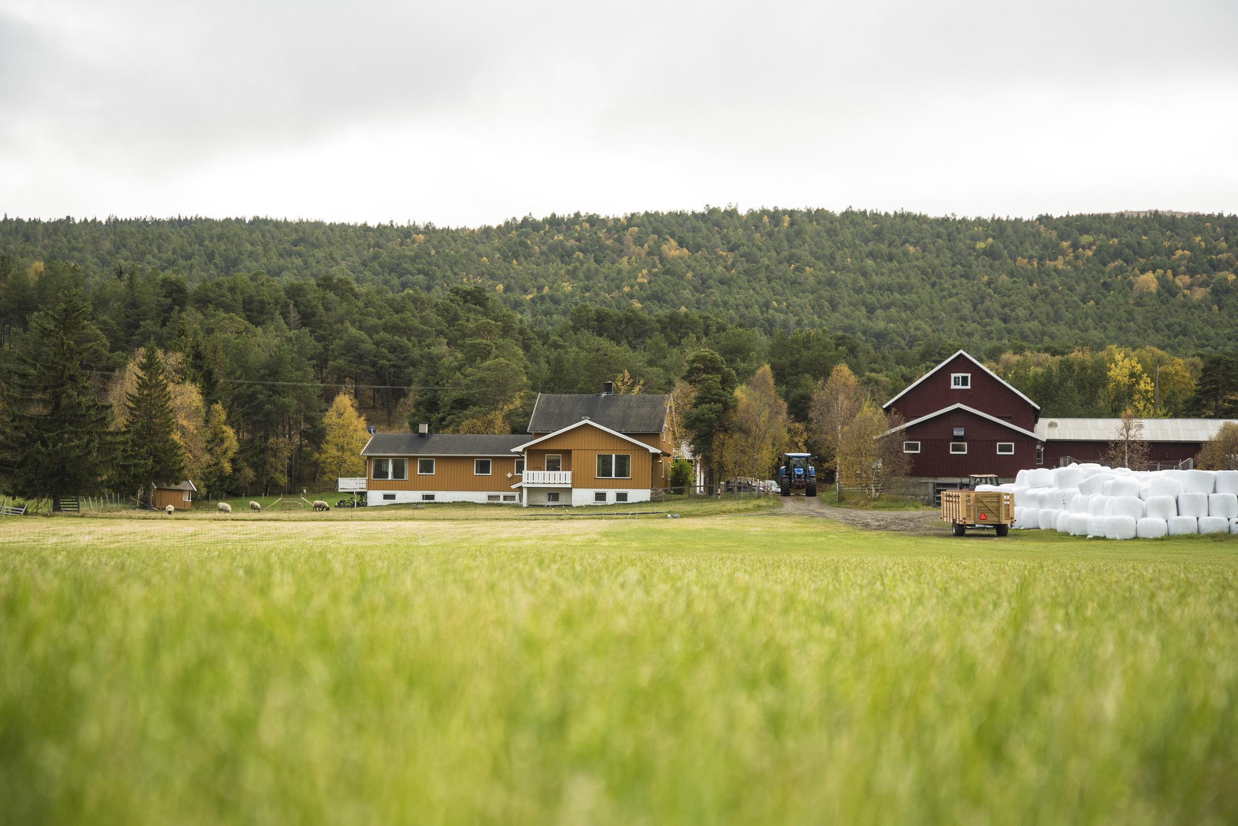 Svanborg gard ligger idyllisk til langs Vestsidevegen på Lesja.