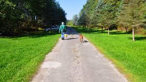 walk dog.jpg
