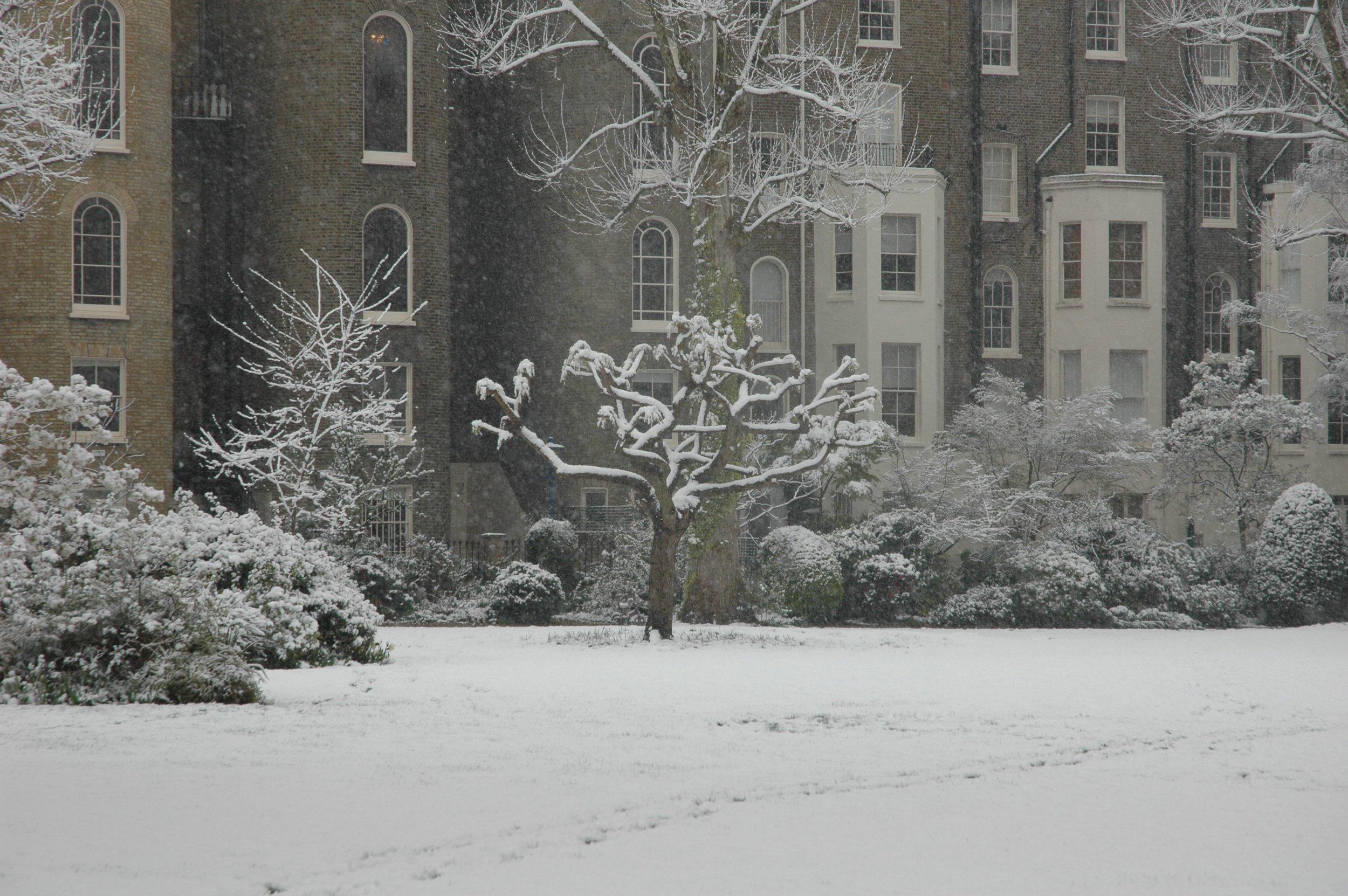 Snowy Tree 2.JPG