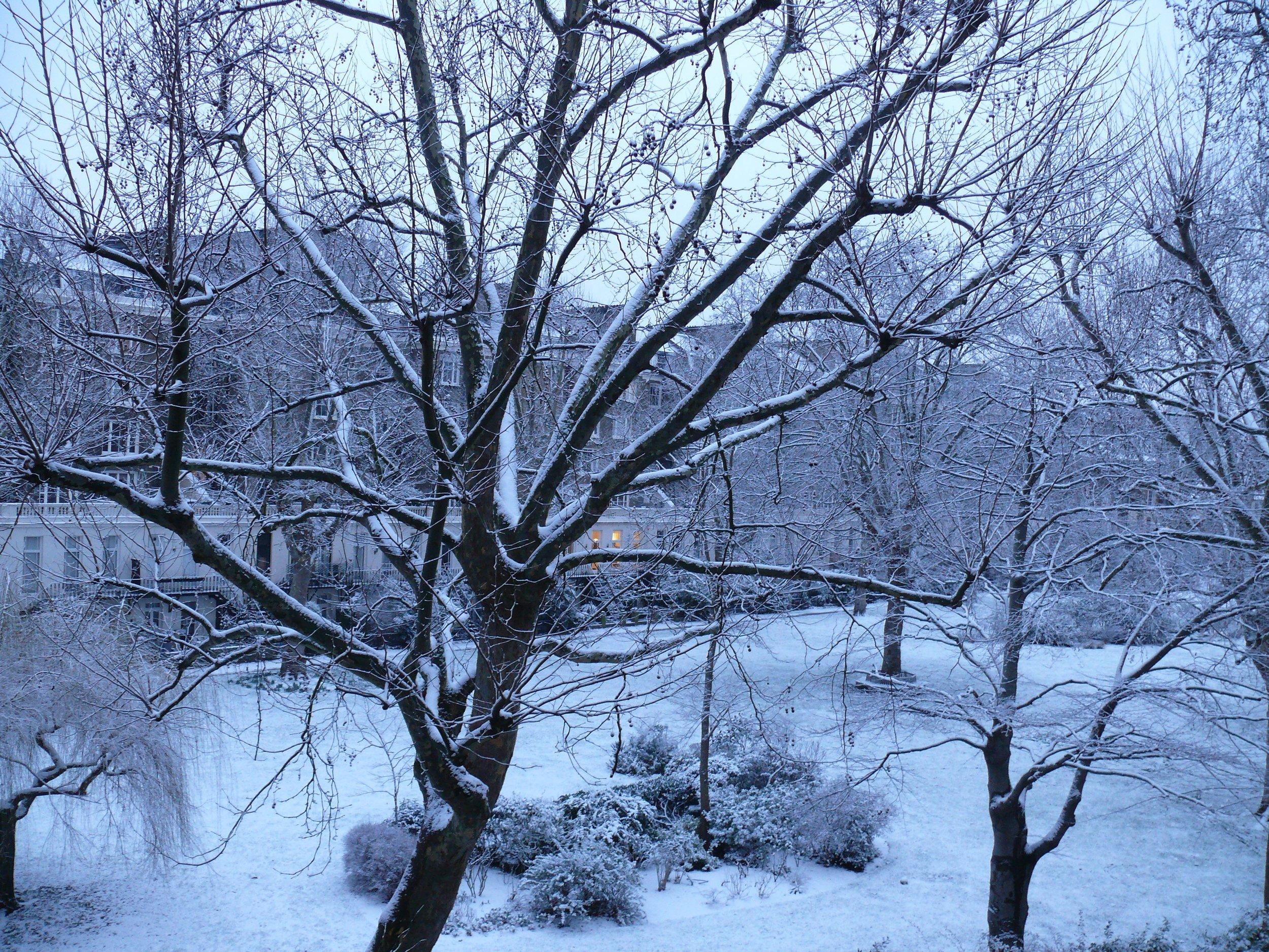 Snowy Tree 3.JPG