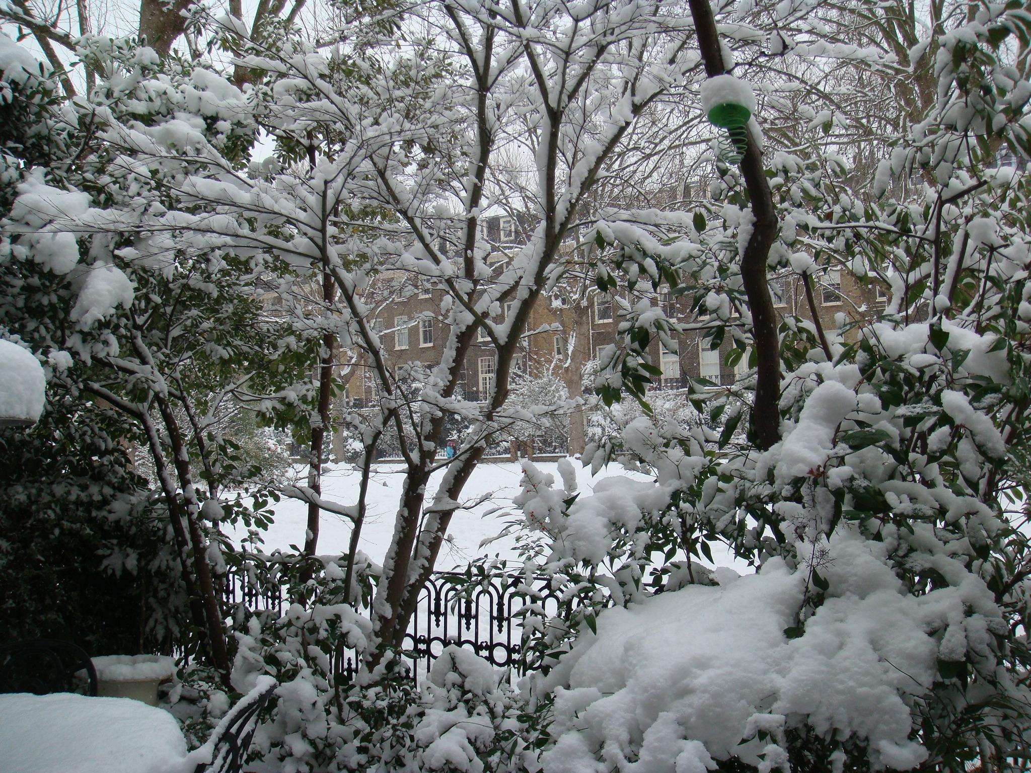 View Through Snowy Trees.JPG