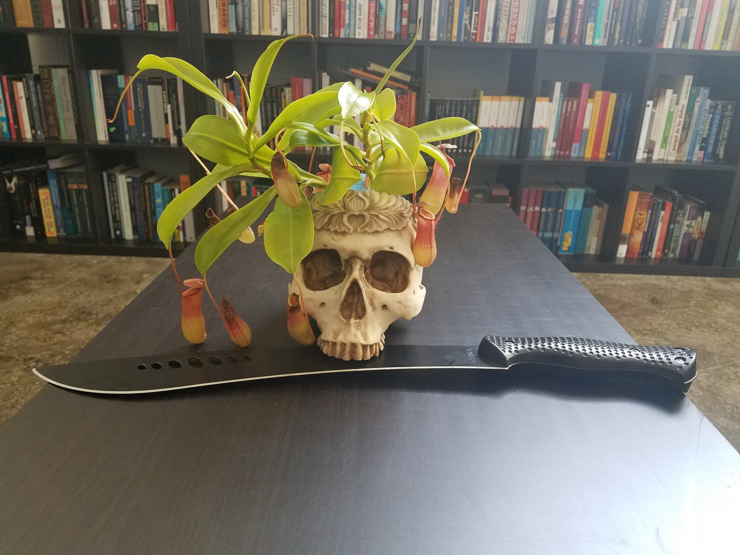 """ Belial, my carnivorous pitcher plant, ... recently repotted into a skull-shaped planter. "" - L.F."