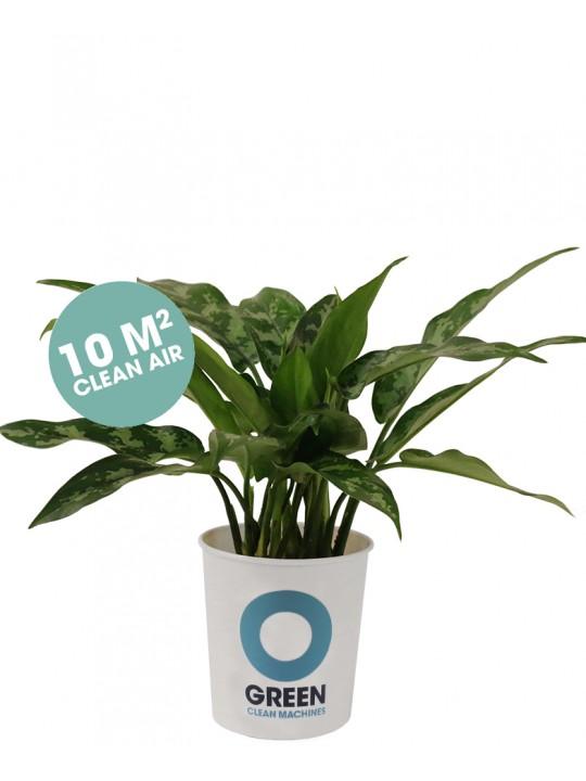 O Green Plant