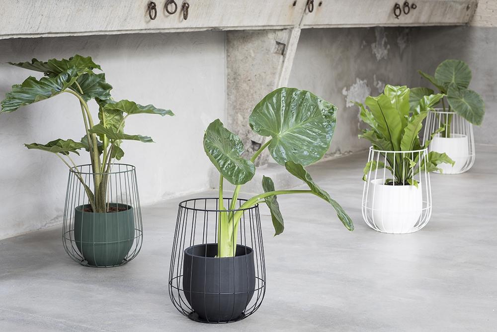 Perron47.Serax.Plant2.jpg