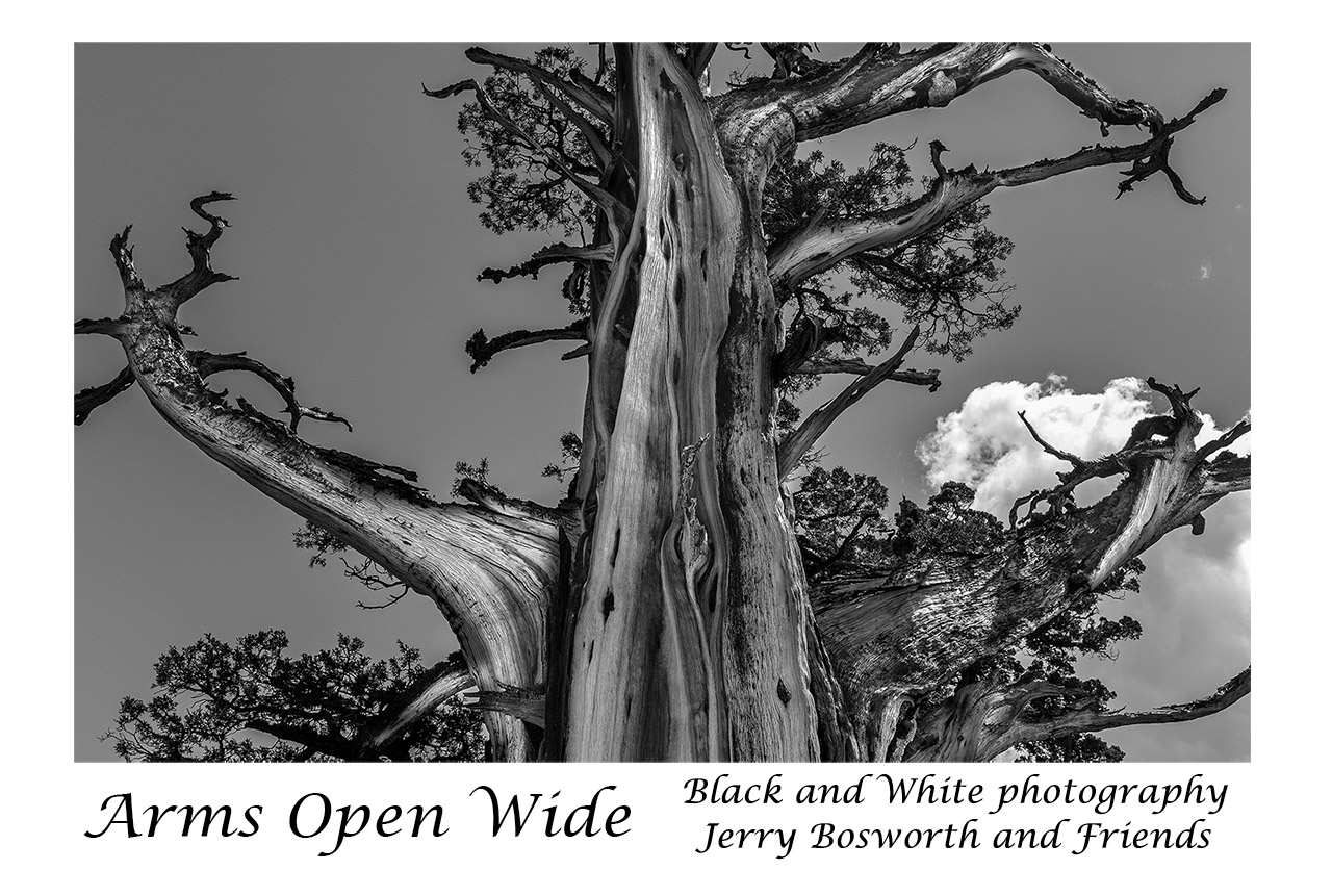 - Black and White Photography ~ Jerry Bosworth and FriendsArms Open Wide will be on display one more week, closing just before the Sierra Art Trails Preview Exhibit, which opens on September 7th.Arms Open Wide is a beautiful show, one of our finest, showcasing black and white photography by six very talented photographers.Most importantly, we are honoring the work of photographer Jerry Bosworth who has been dedicated to black and white photography since before cameras were invented. If you have not seen the show, please stop in. It is well worth a look!LEARN MORE