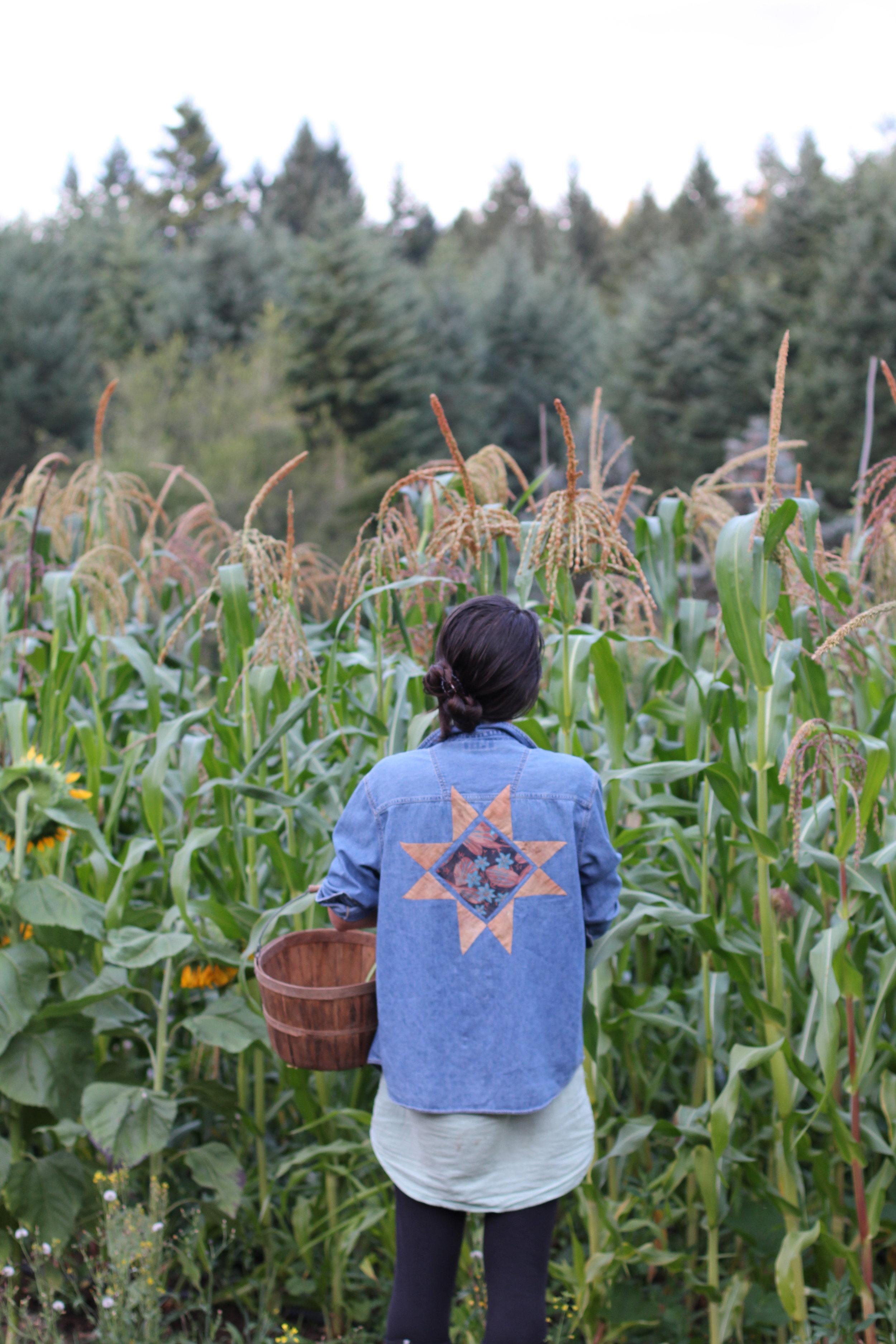 thefarwoods_corn