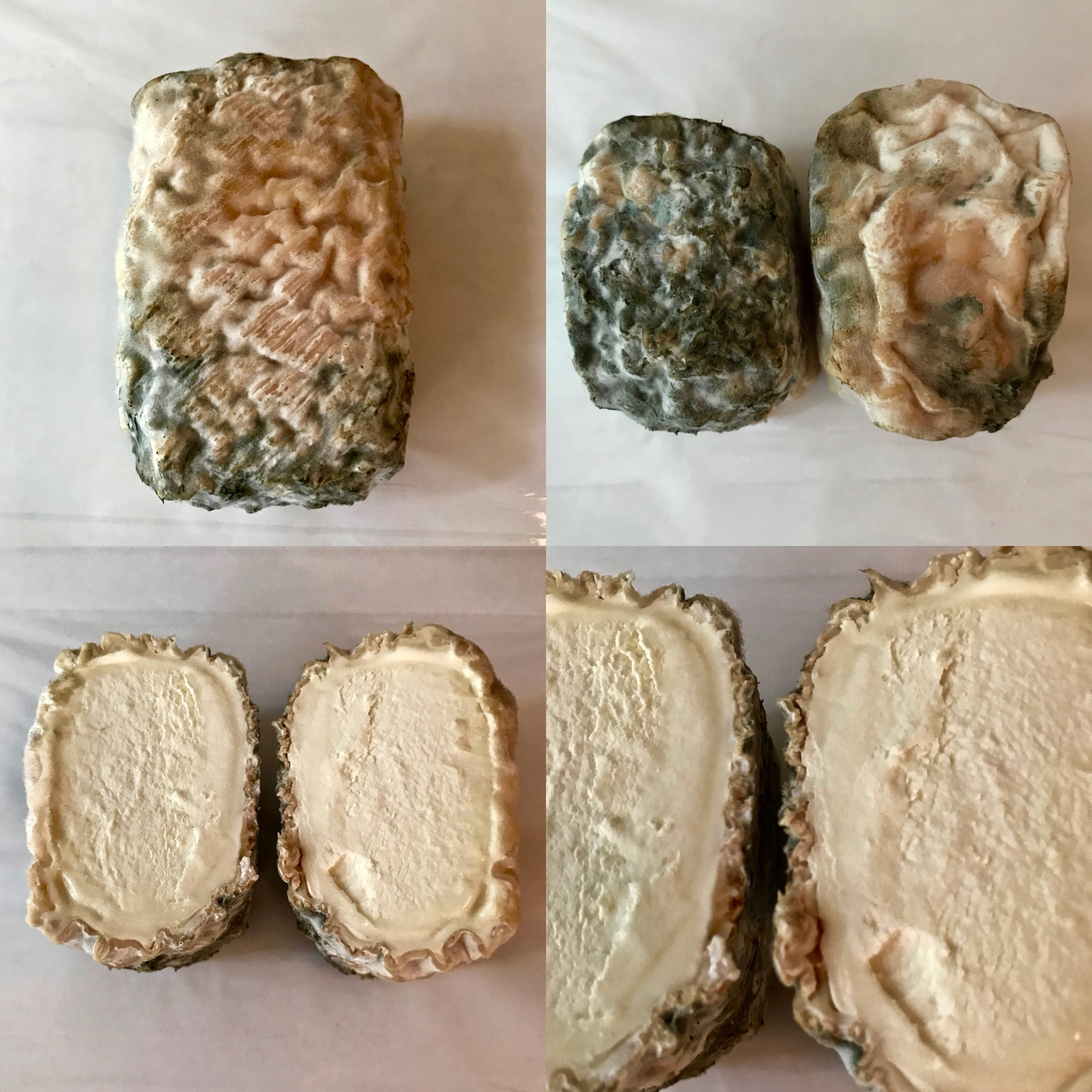 Dirty Harriet - Dirty Harriet is all gooey, all gorgeous and all goat! A raw milk lactic cheese, she ripens over a 4 to 8 week period. You can see ripening progress in the 4 week cheese pictured to the right. No prissy white rind for this gal, we let her rind go wild to show off a full expression of the microbes in our milk and a few added blue molds. Feeling lucky today? If so, take her home and make my day!