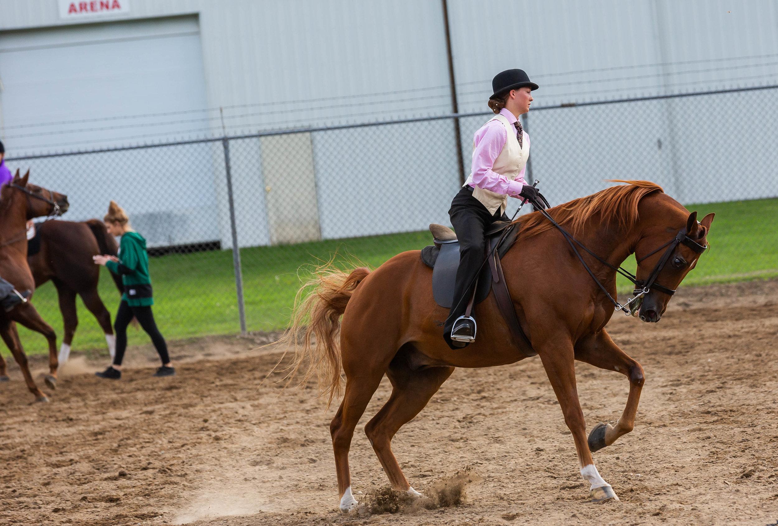 Andrea Horse (2 of 39).jpg