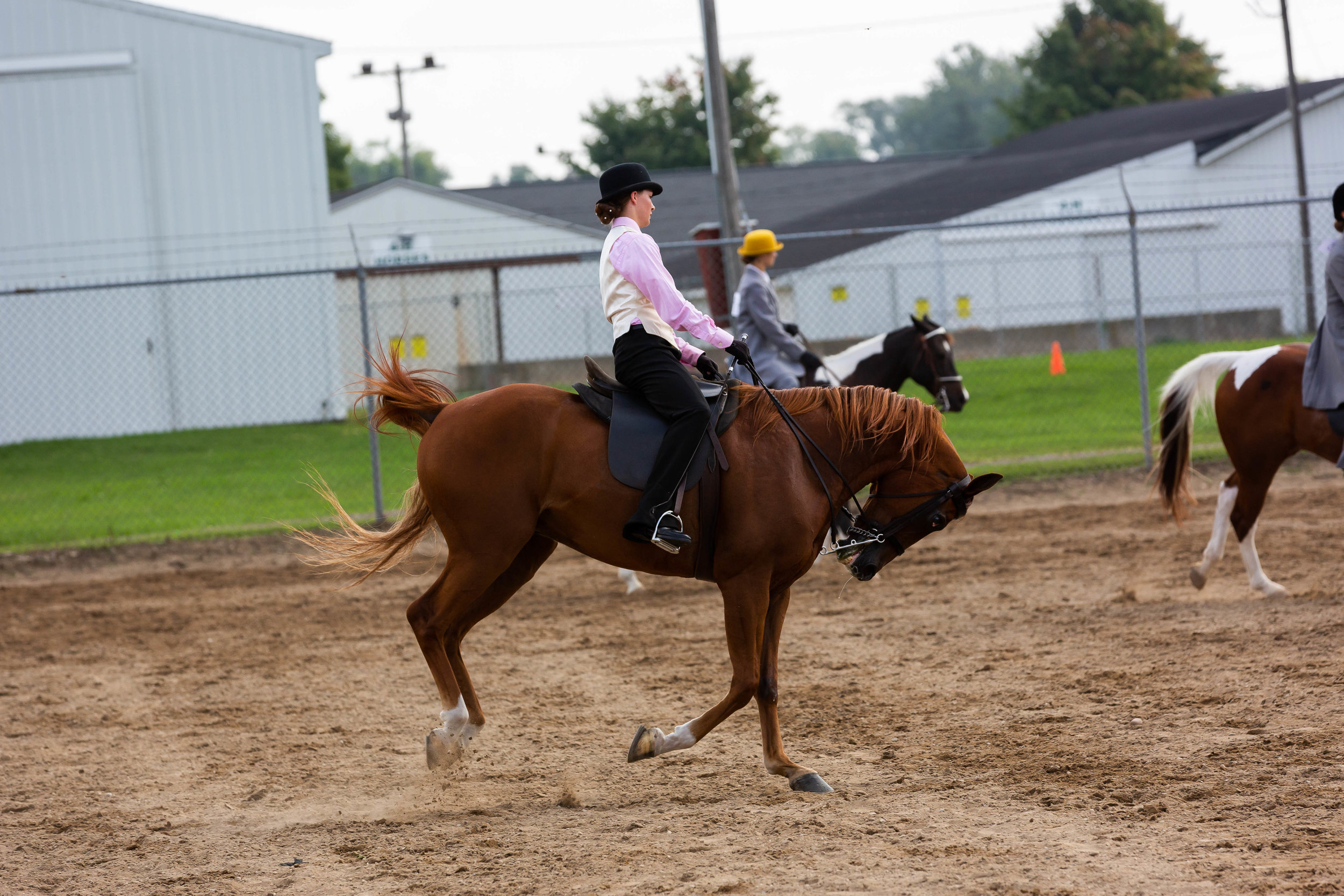 Andrea Horse (3 of 39).jpg