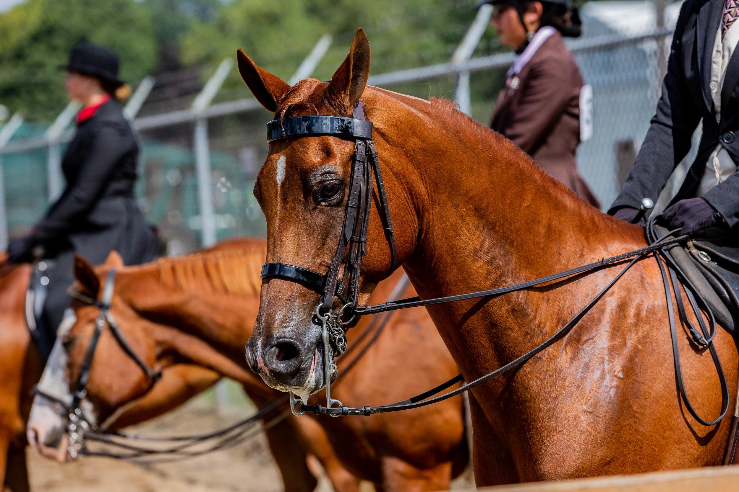 Andrea Horse (17 of 39).jpg