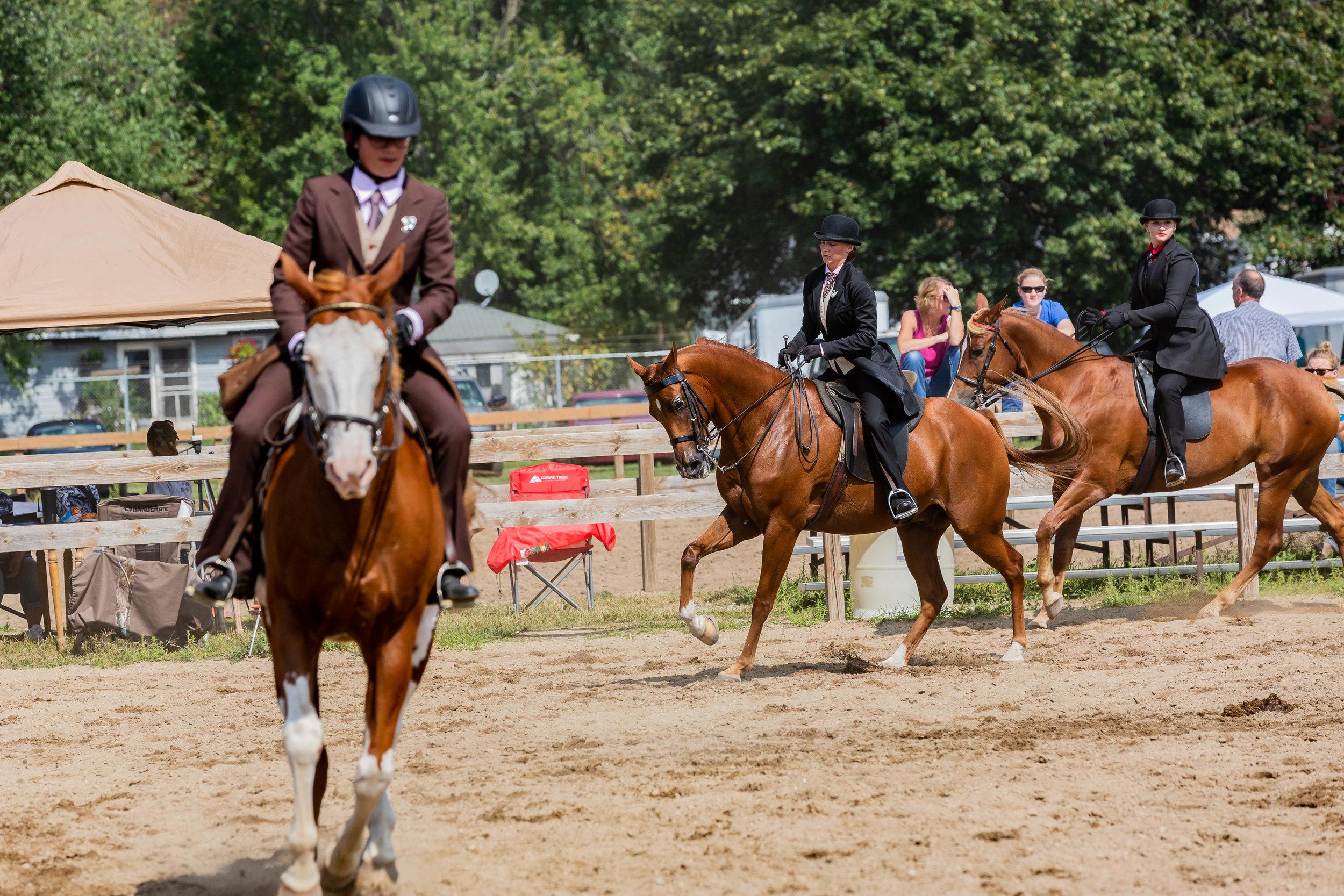 Andrea Horse (26 of 39).jpg