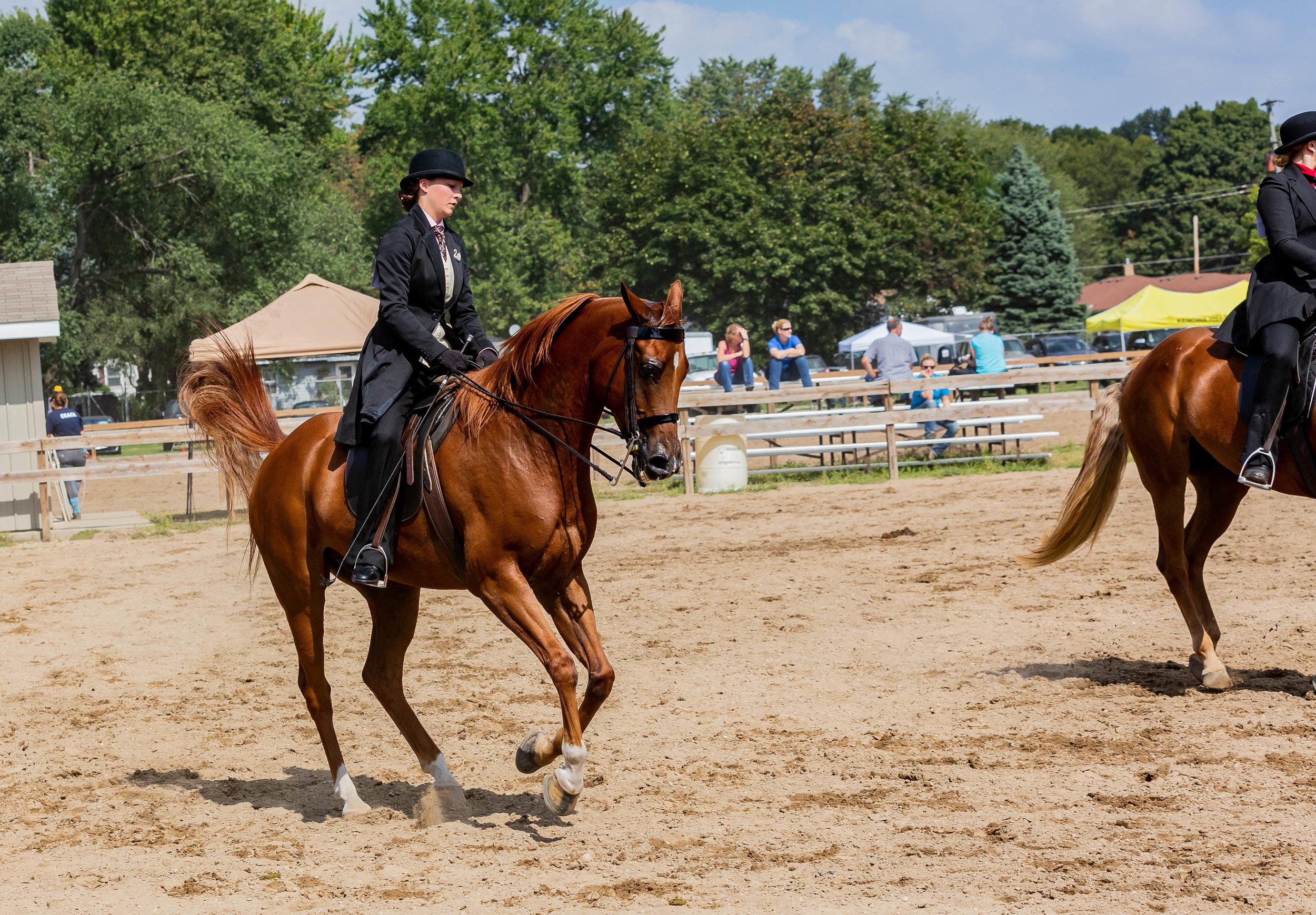 Andrea Horse (27 of 39).jpg