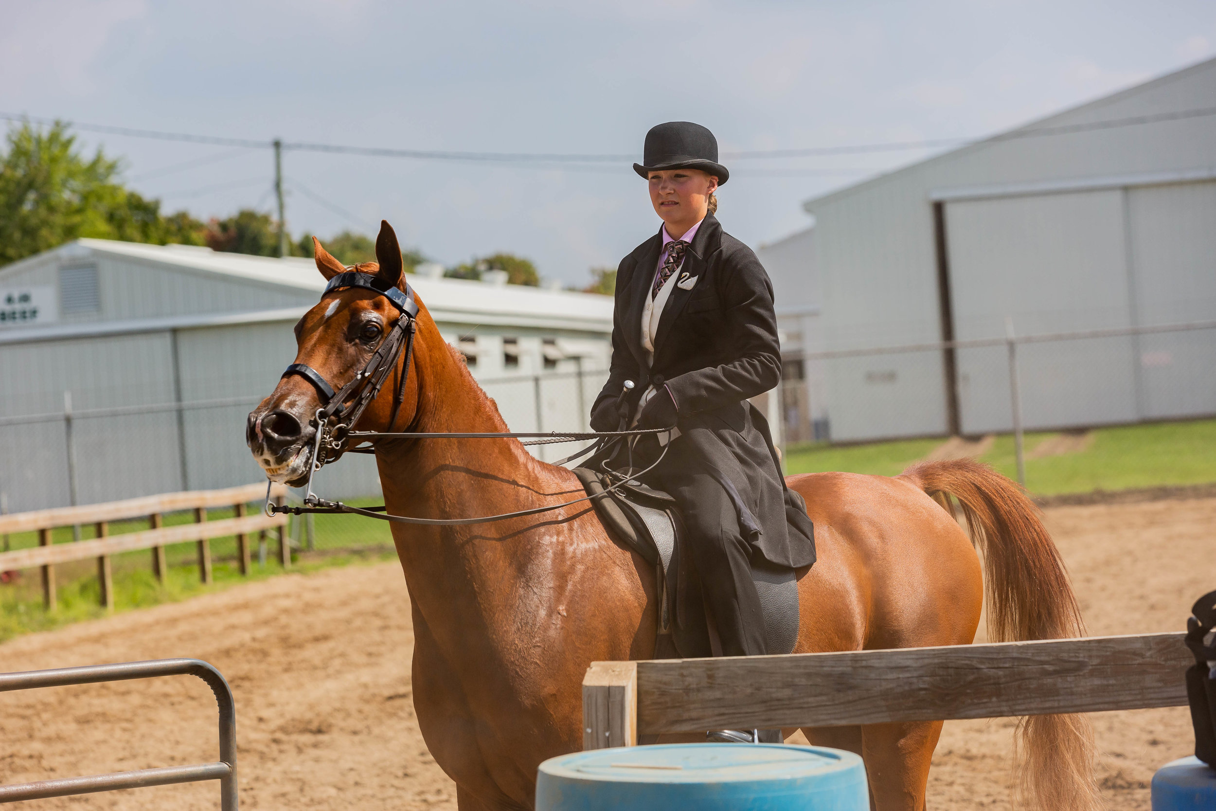 Andrea Horse (28 of 39).jpg
