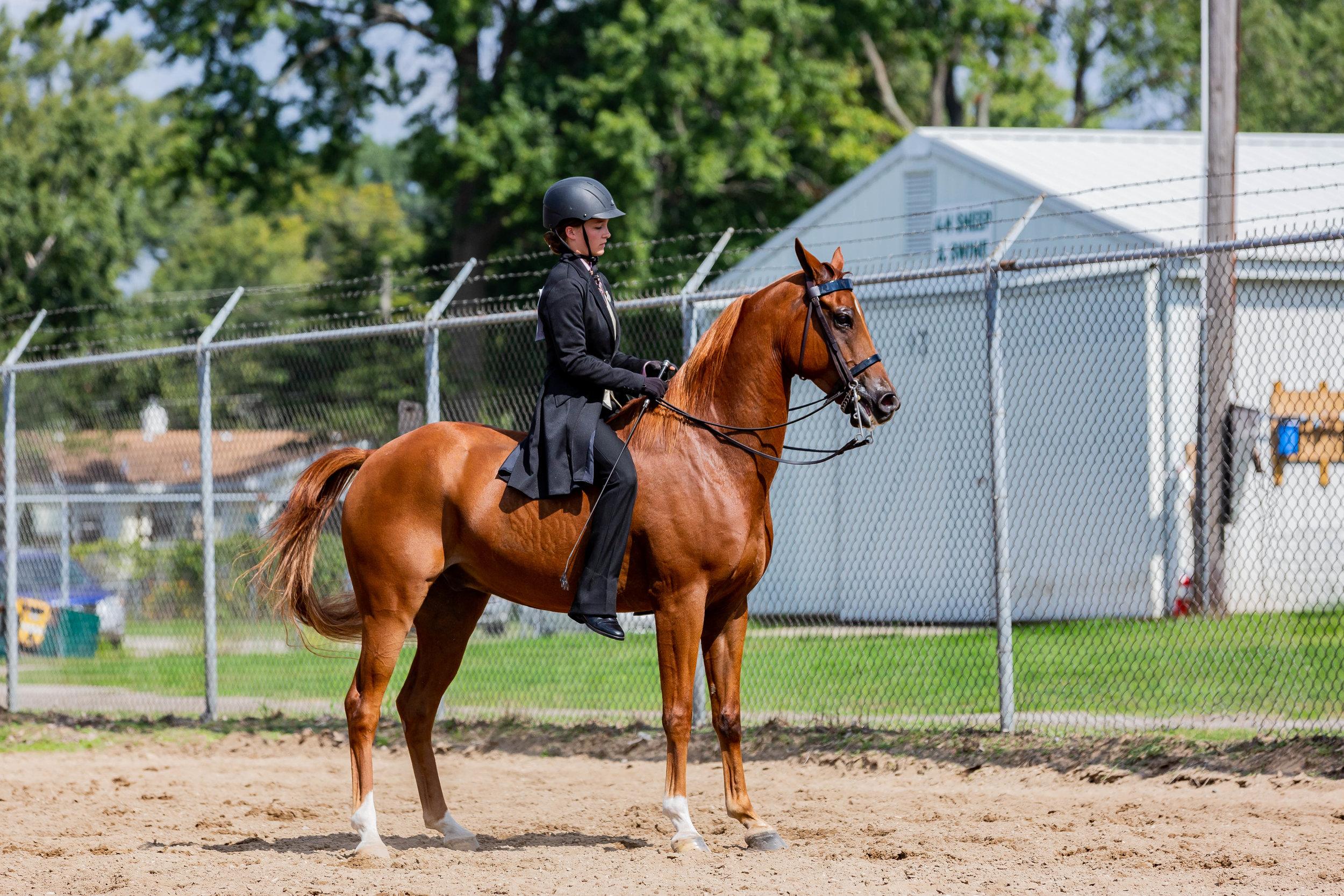 Andrea Horse (33 of 39).jpg