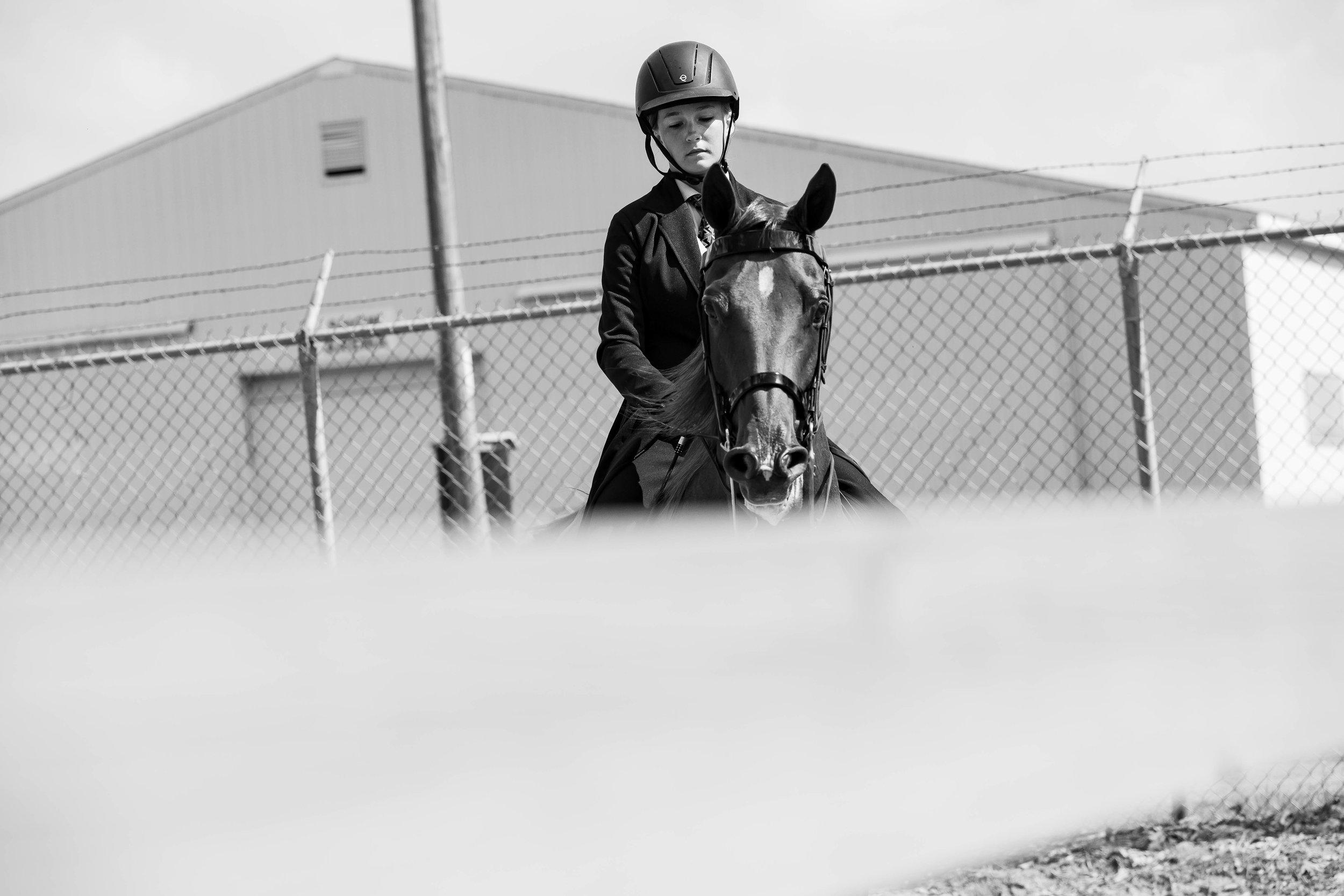 Andrea Horse (35 of 39).jpg